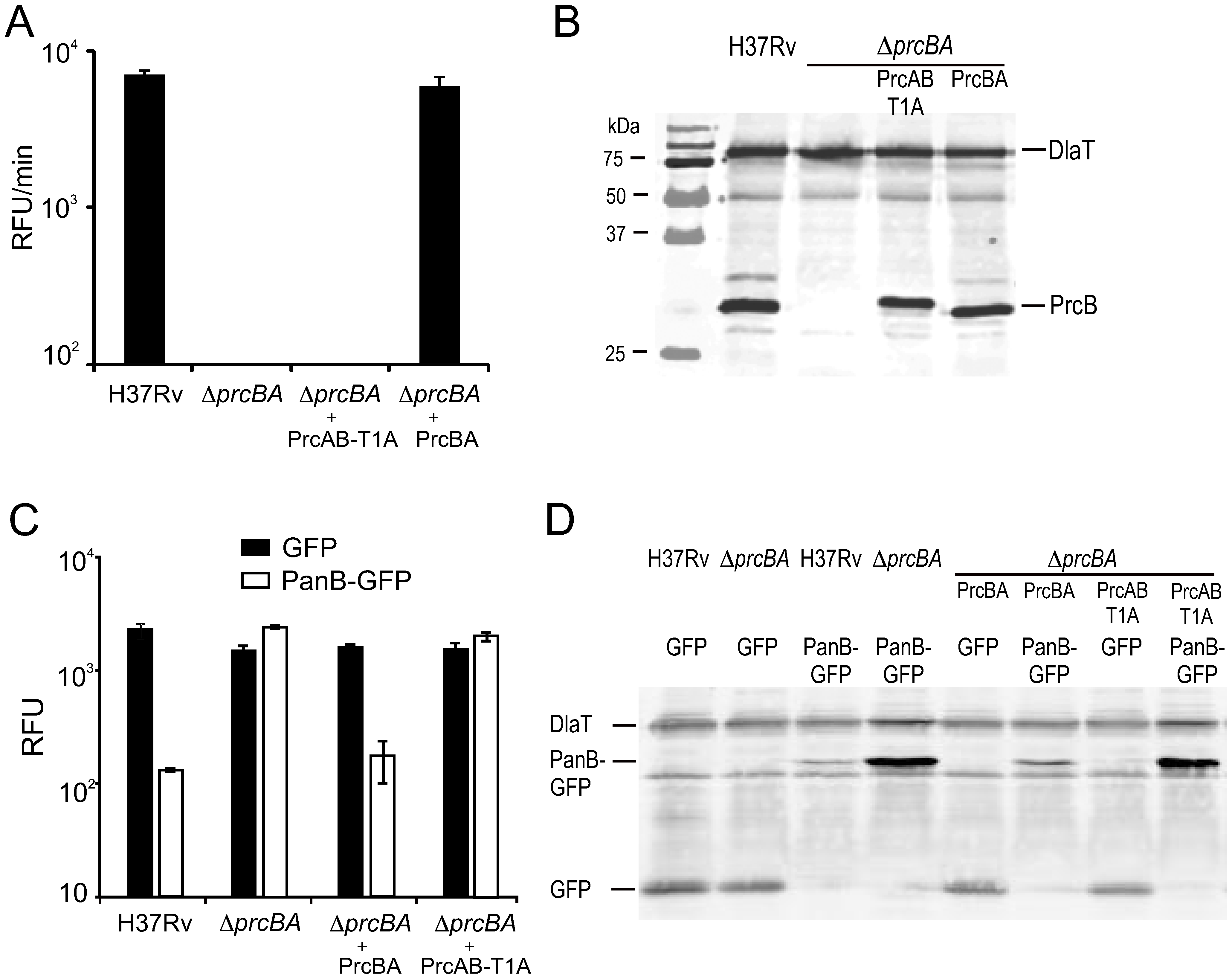 Characterization of the active site mutant proteasome.