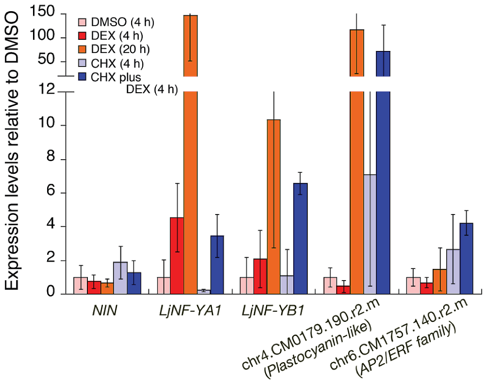 Expression of candidate NIN-target genes in roots that were ectopically expressing the NIN protein.