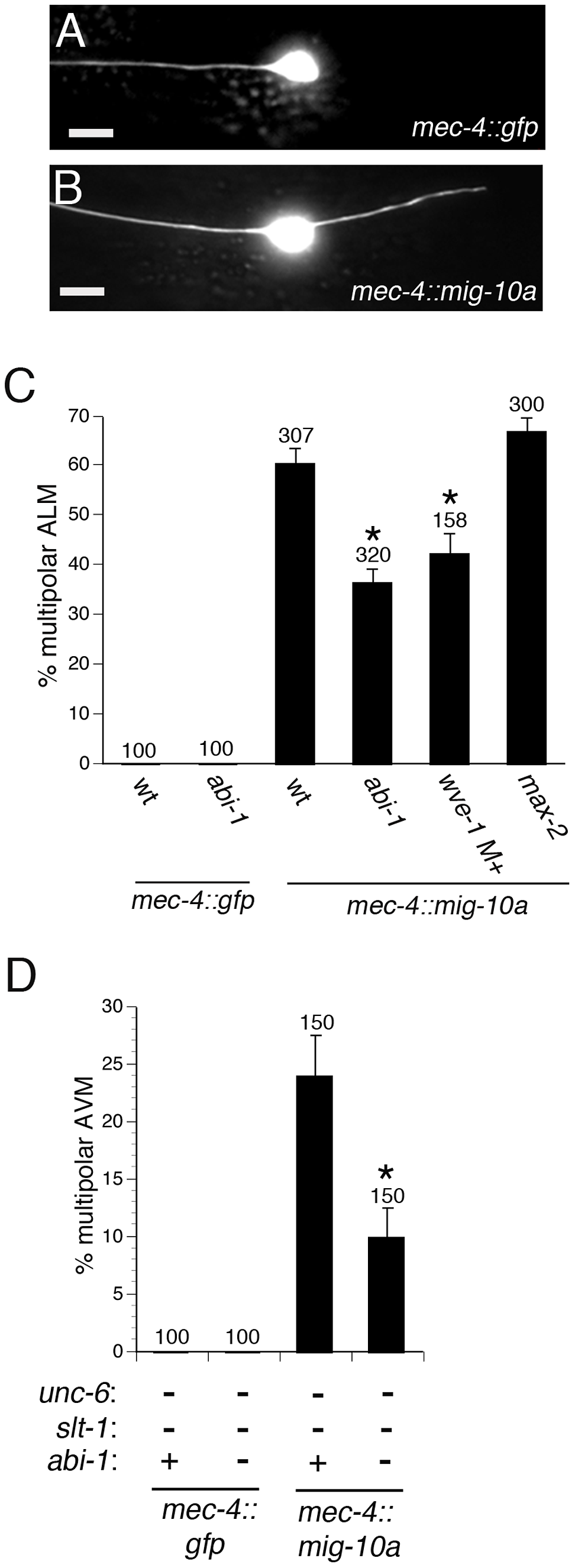 ABI-1 and WVE-1 mediate outgrowth-promoting activity downstream of MIG-10.
