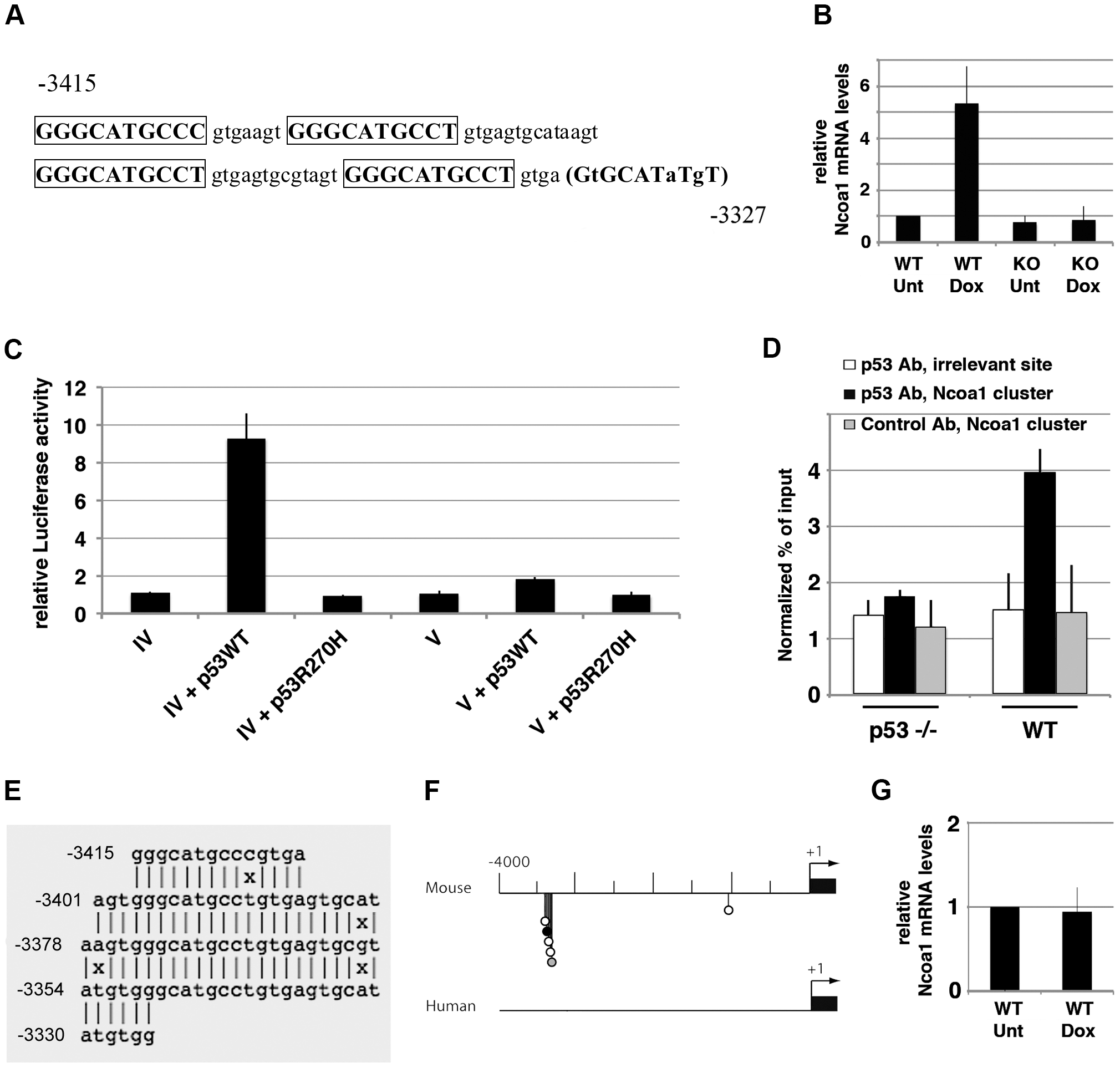 Transactivation of murine <i>Ncoa1</i> by p53 relies on a cluster of p53 half-sites.