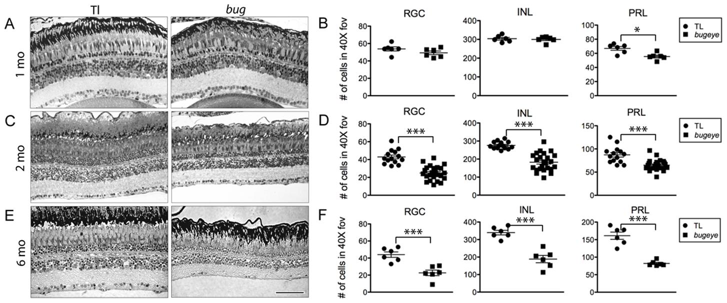 Retinal cell density.