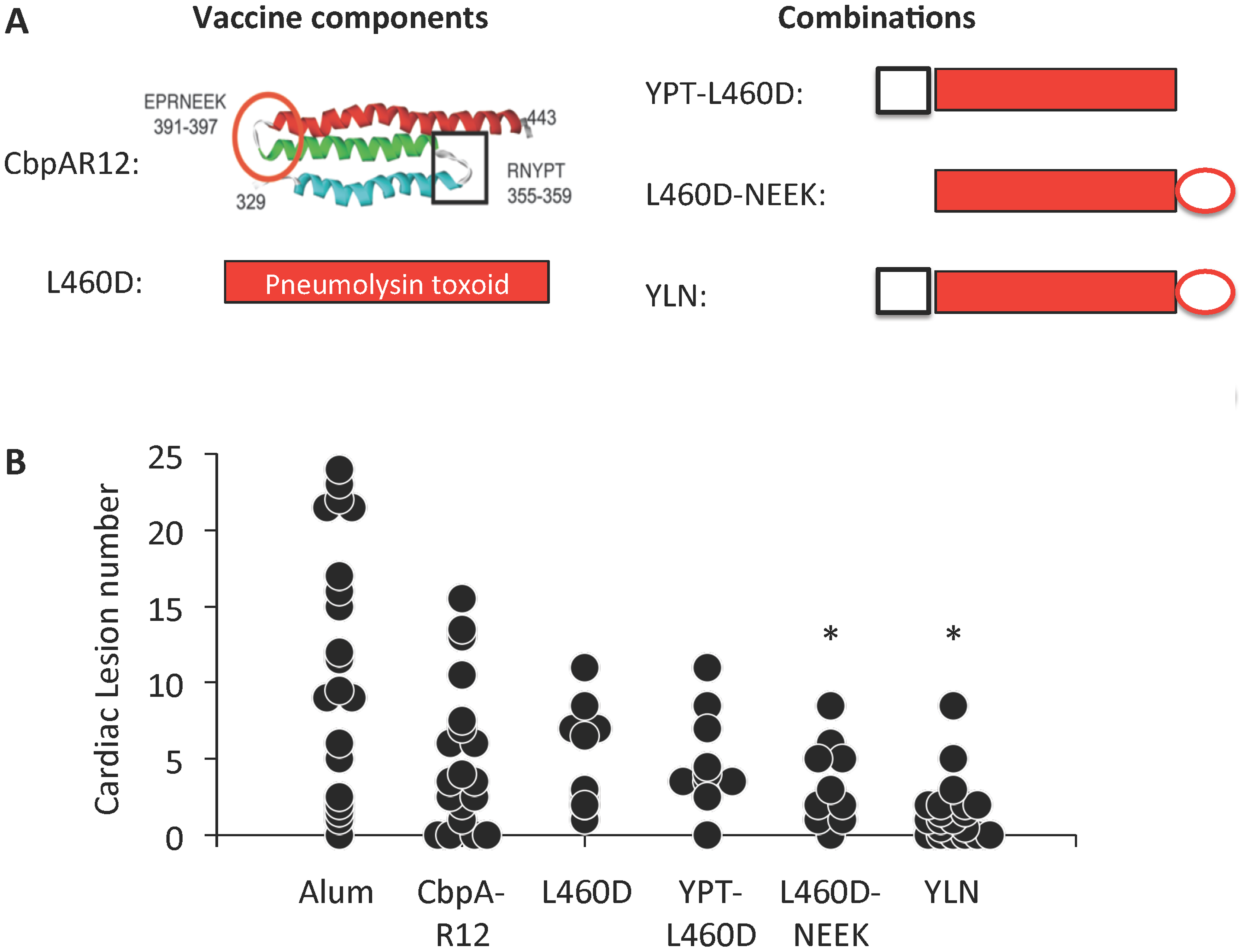 YLN immunized mice are protected against lesion formation.