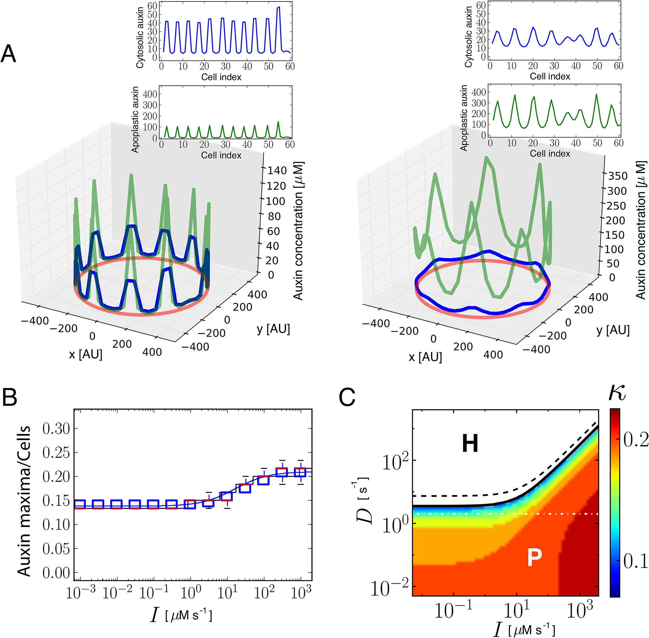 Theoretical and simulation results predict that auxin influx carriers facilitate periodic patterning and promote auxin maxima.