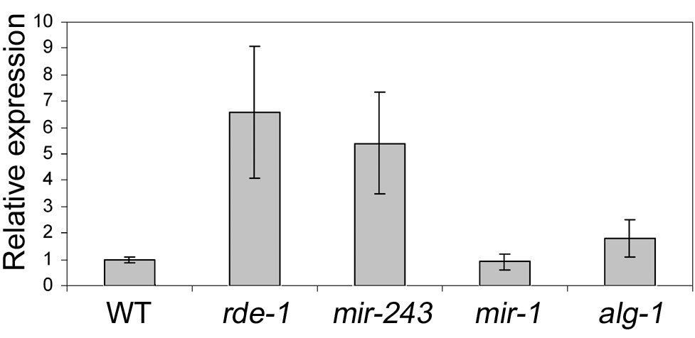 Y47 transcript is upregulated in RNAi– or miR-243–deficient worms.
