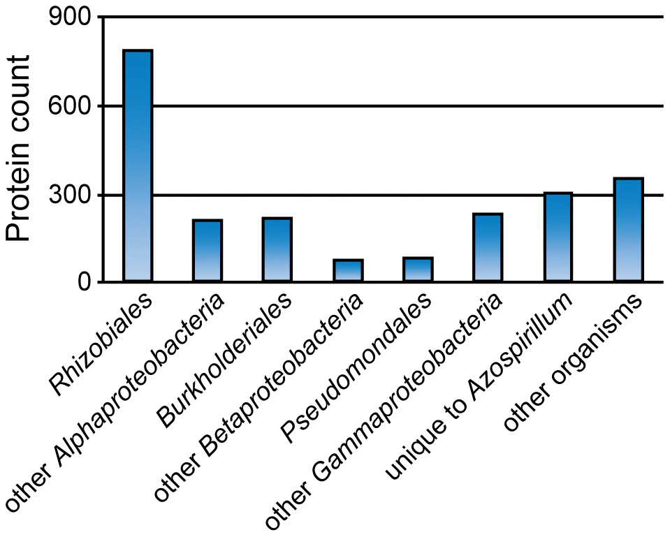 Taxonomic distribution of the best BLAST hits for predicted HGT in <i>Azospirillum</i>.