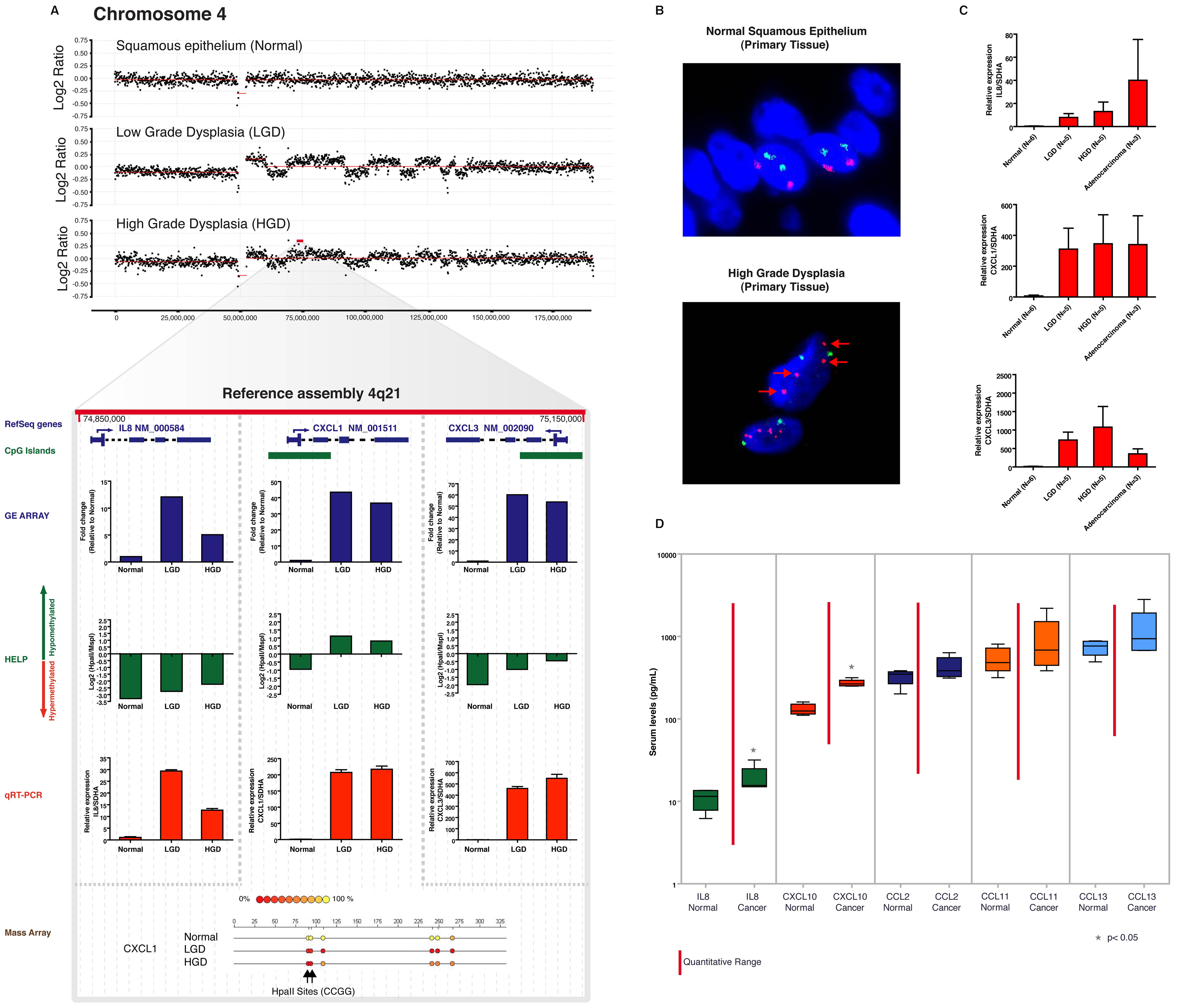 Aberrant expression of a 4q21 chemokine cluster by gene amplification and promoter hypomethylation during esophageal carcinogenesis.