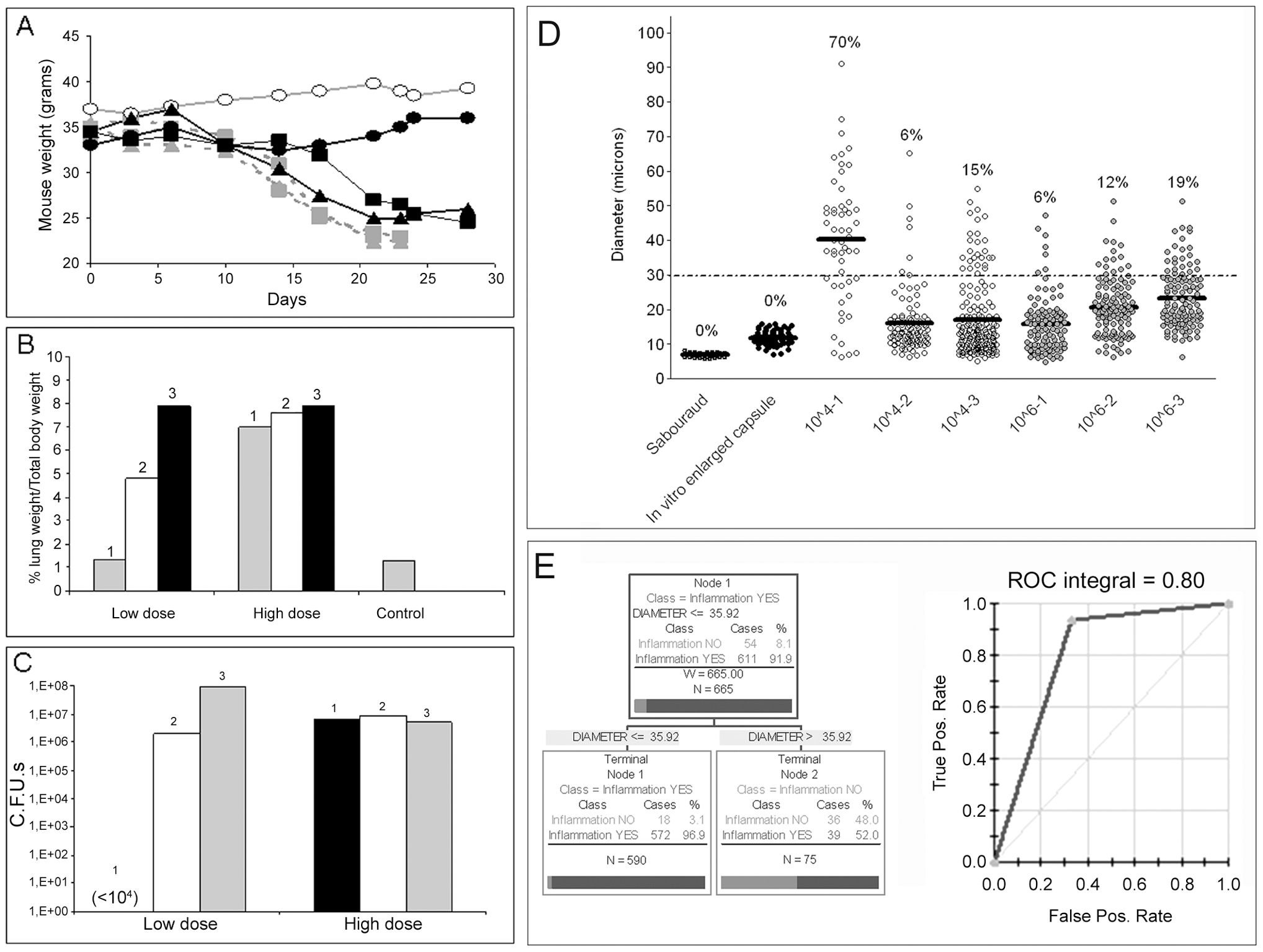 Parameters of disease in mice infected with <i>C. neoformans</i> and giant cell proportion in the lungs.