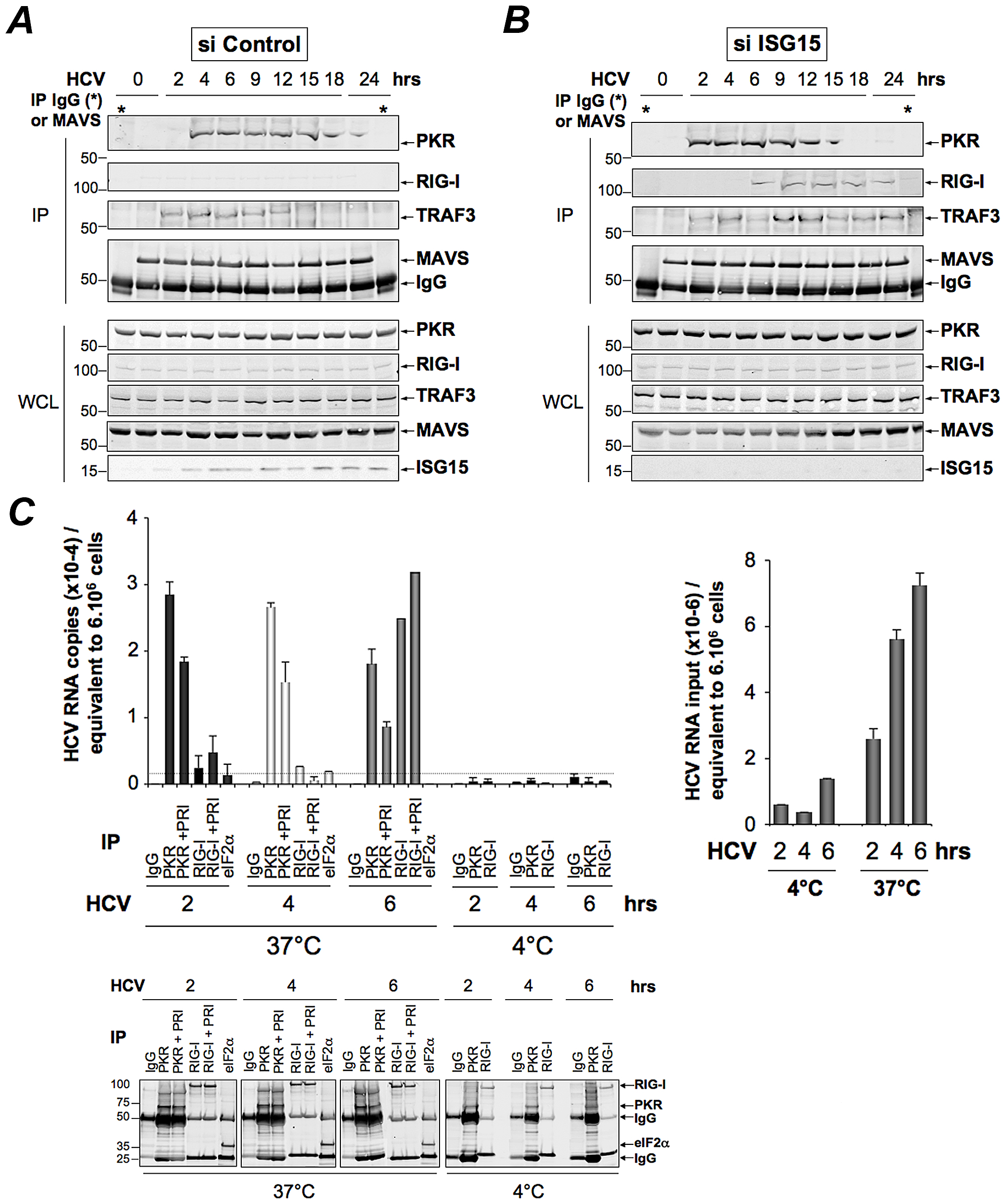 PKR both interacts with MAVS and TRAF3 and binds HCV RNA ahead of RIG-I.