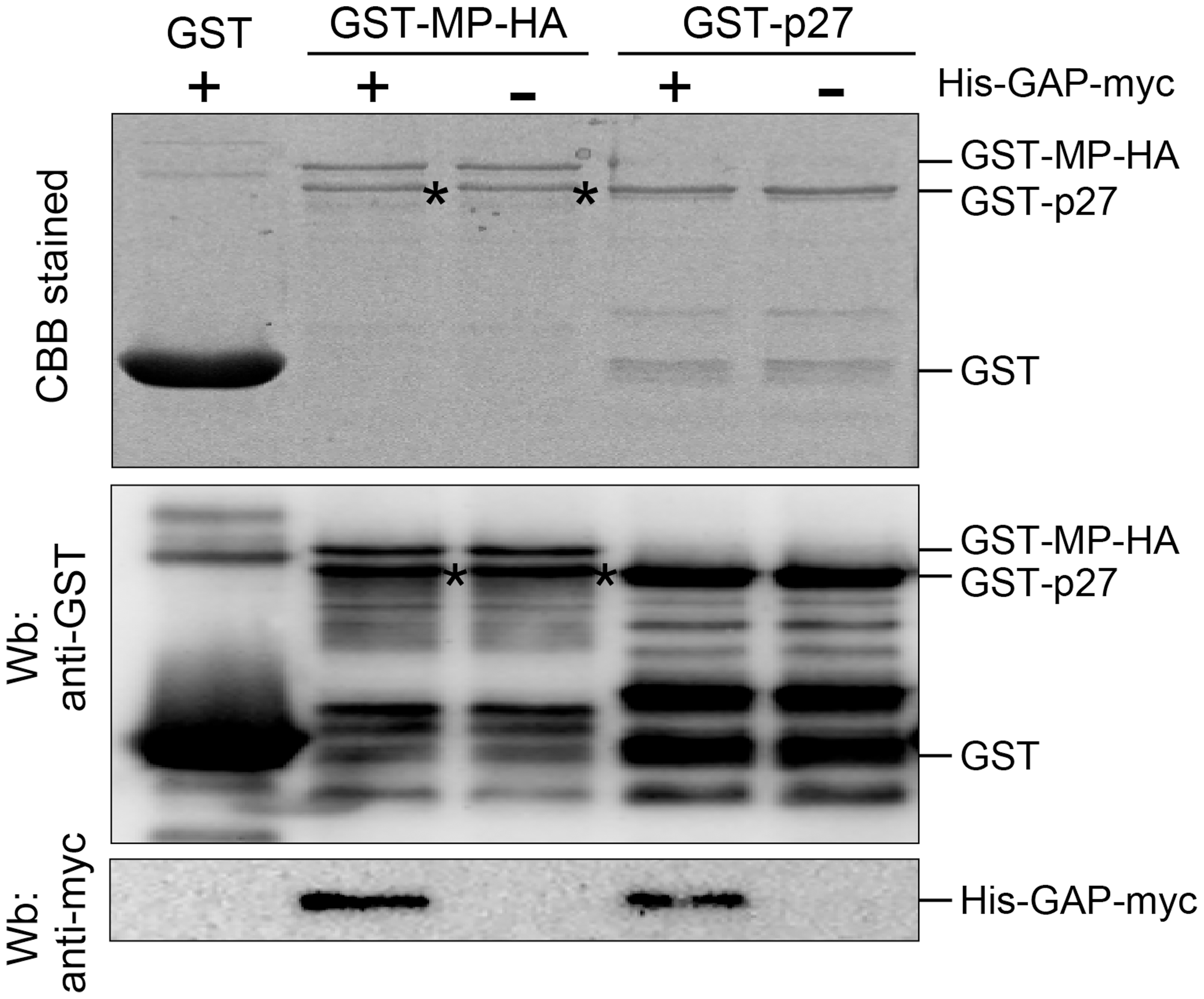 NbGAPDH-A interacts with both RCNMV MP and p27 <i>in vitro</i>.