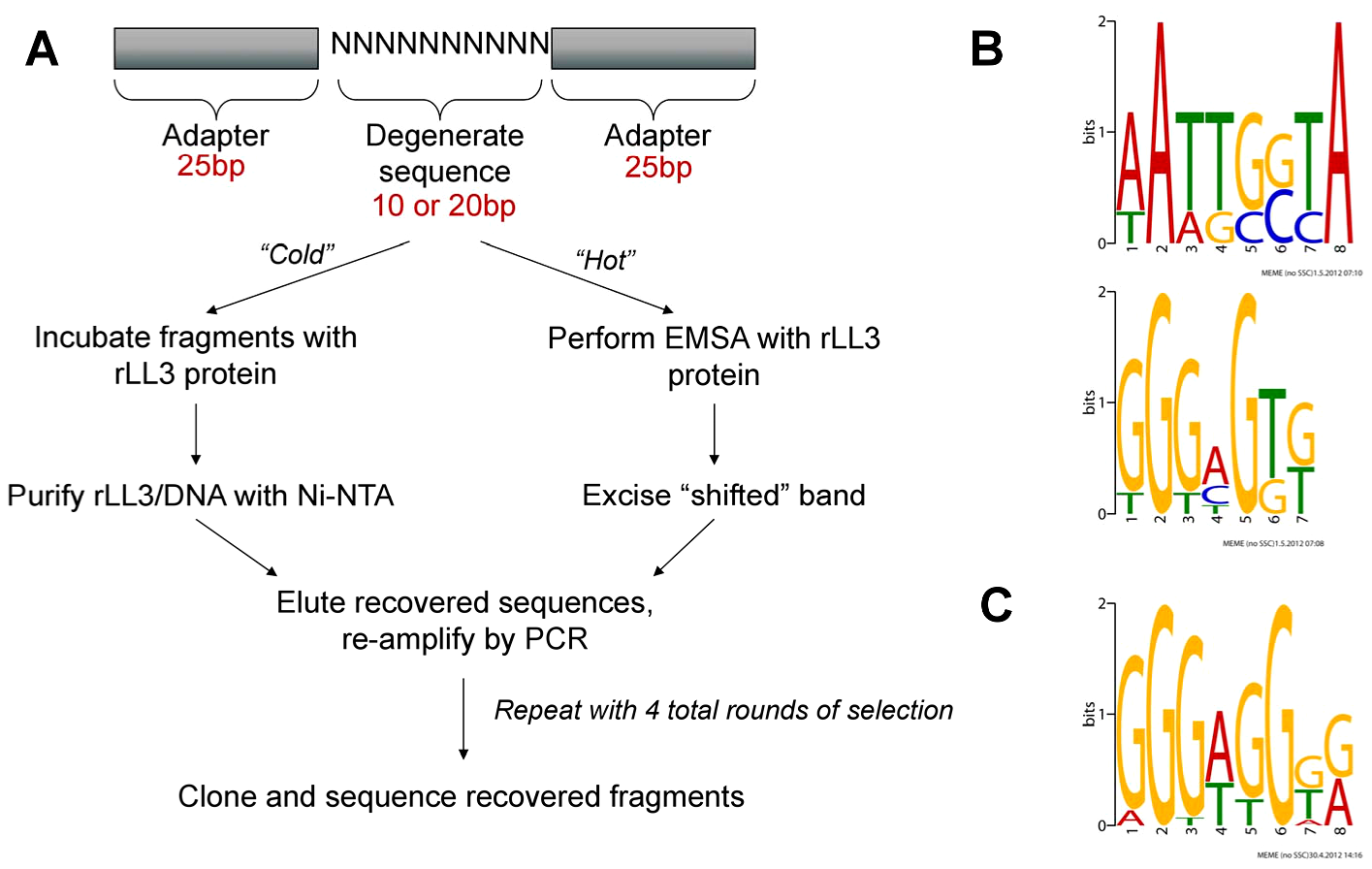 PCR-assisted DNA-binding site selection reveals consensus LL3 DNA-binding motifs.