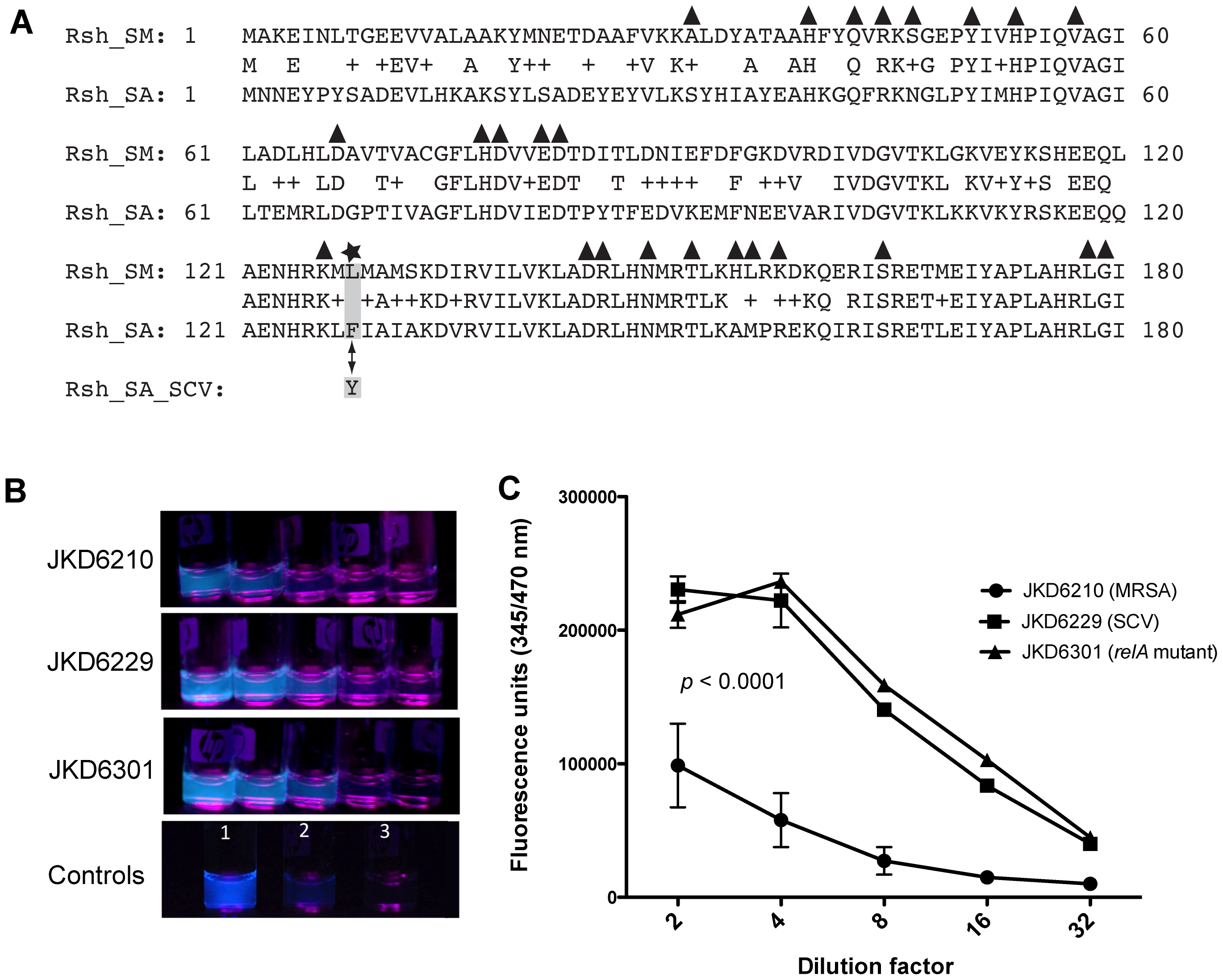 Location of RelA mutation in JKD6229 and impact of the mutation on cellular ppGpp levels.