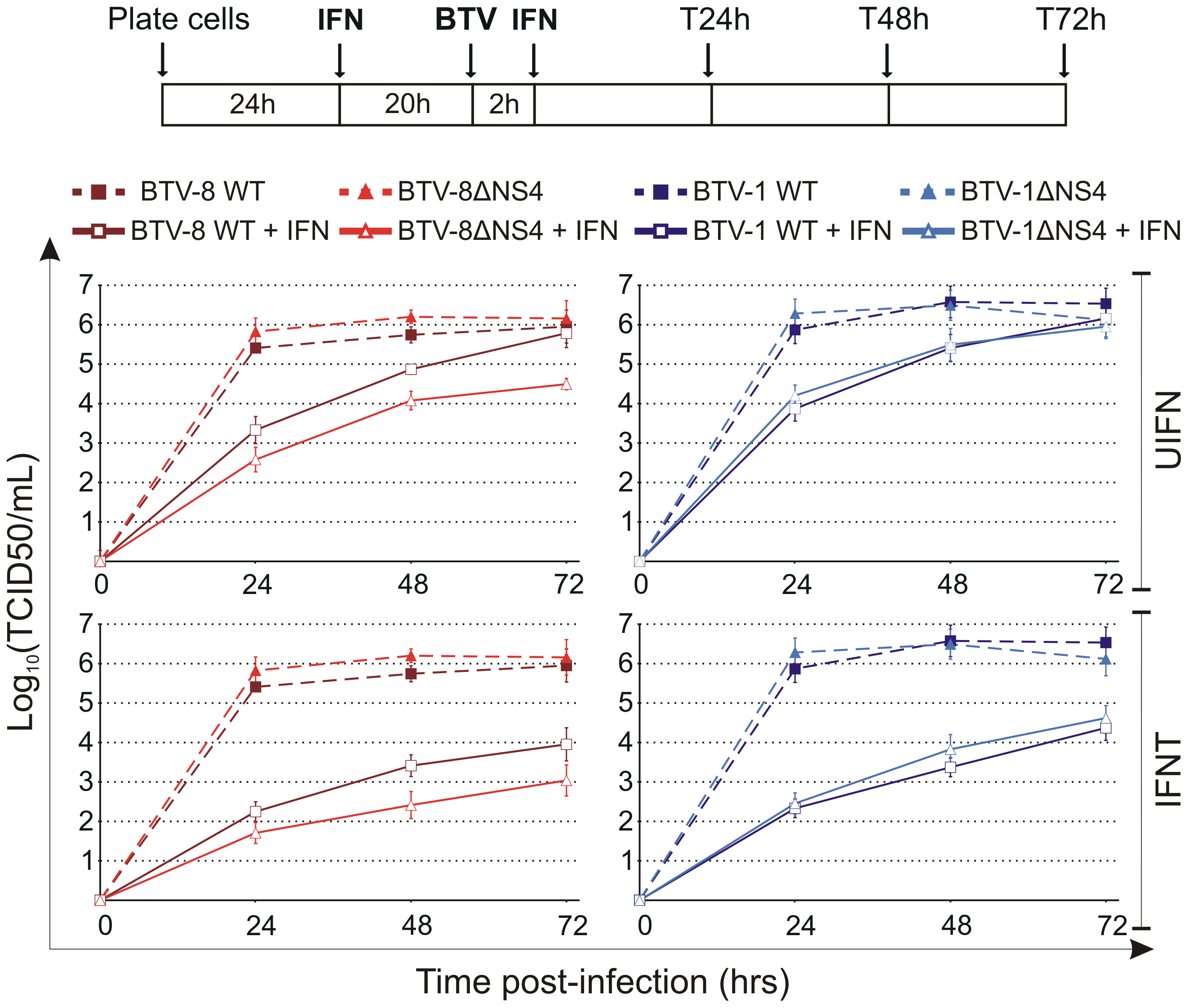 <i>In vitro</i> growth properties of rescued WT and ΔNS4 viruses during interferon treatment.