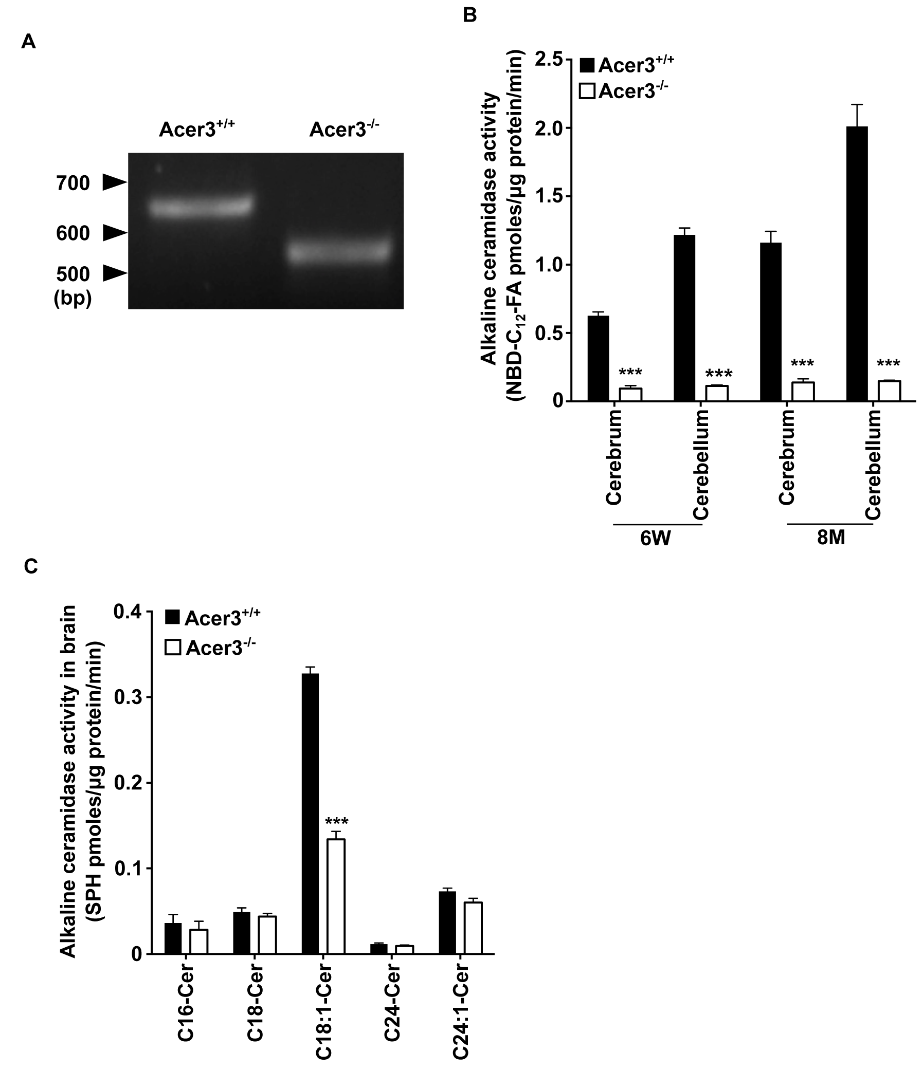 Acer3 knockout decreases alkaline ceramidase activity on ULCC in the brain.