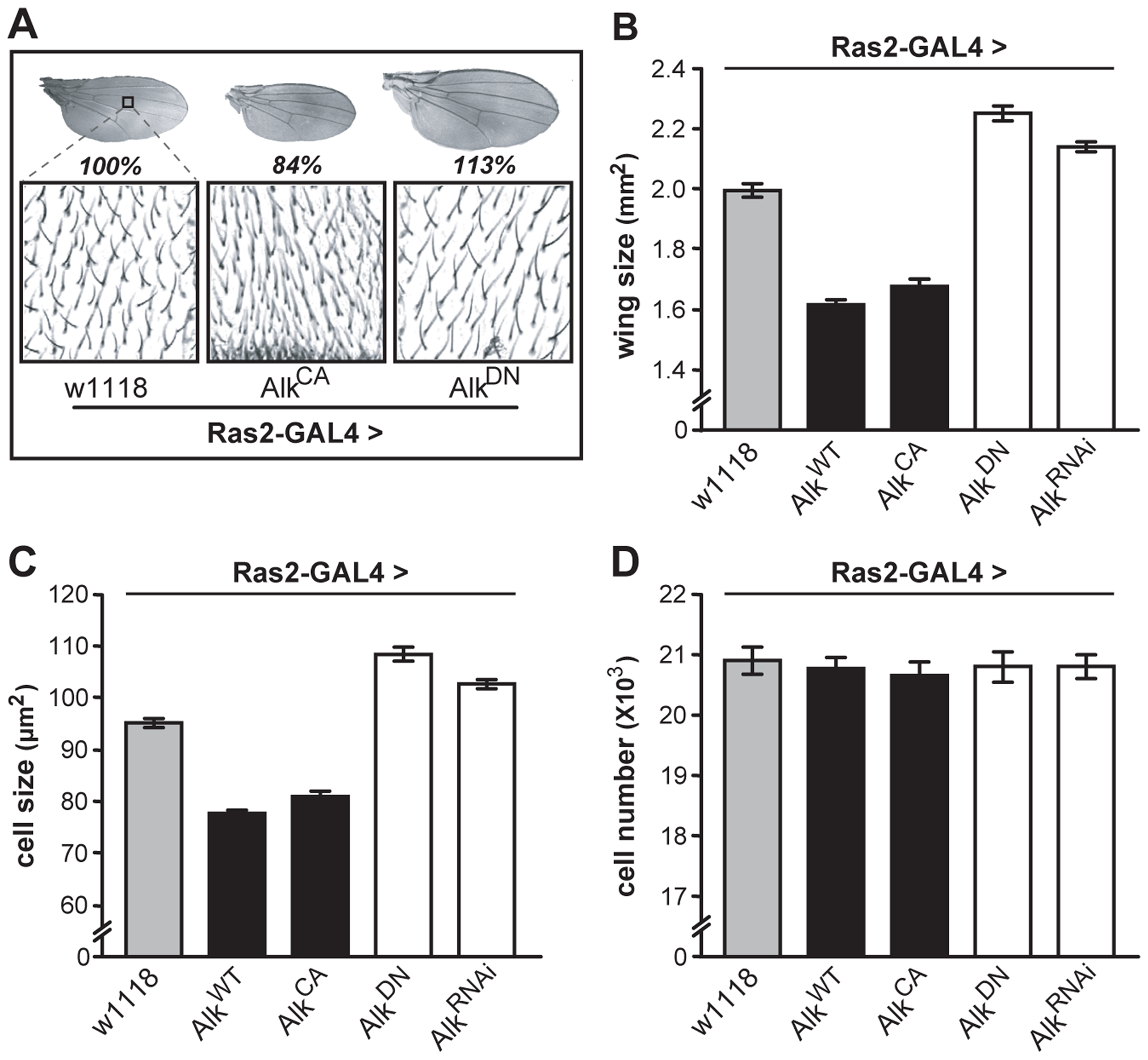 dAlk activity in Ras2-expressing cells affects organism size through changes in cell size and not cell number.