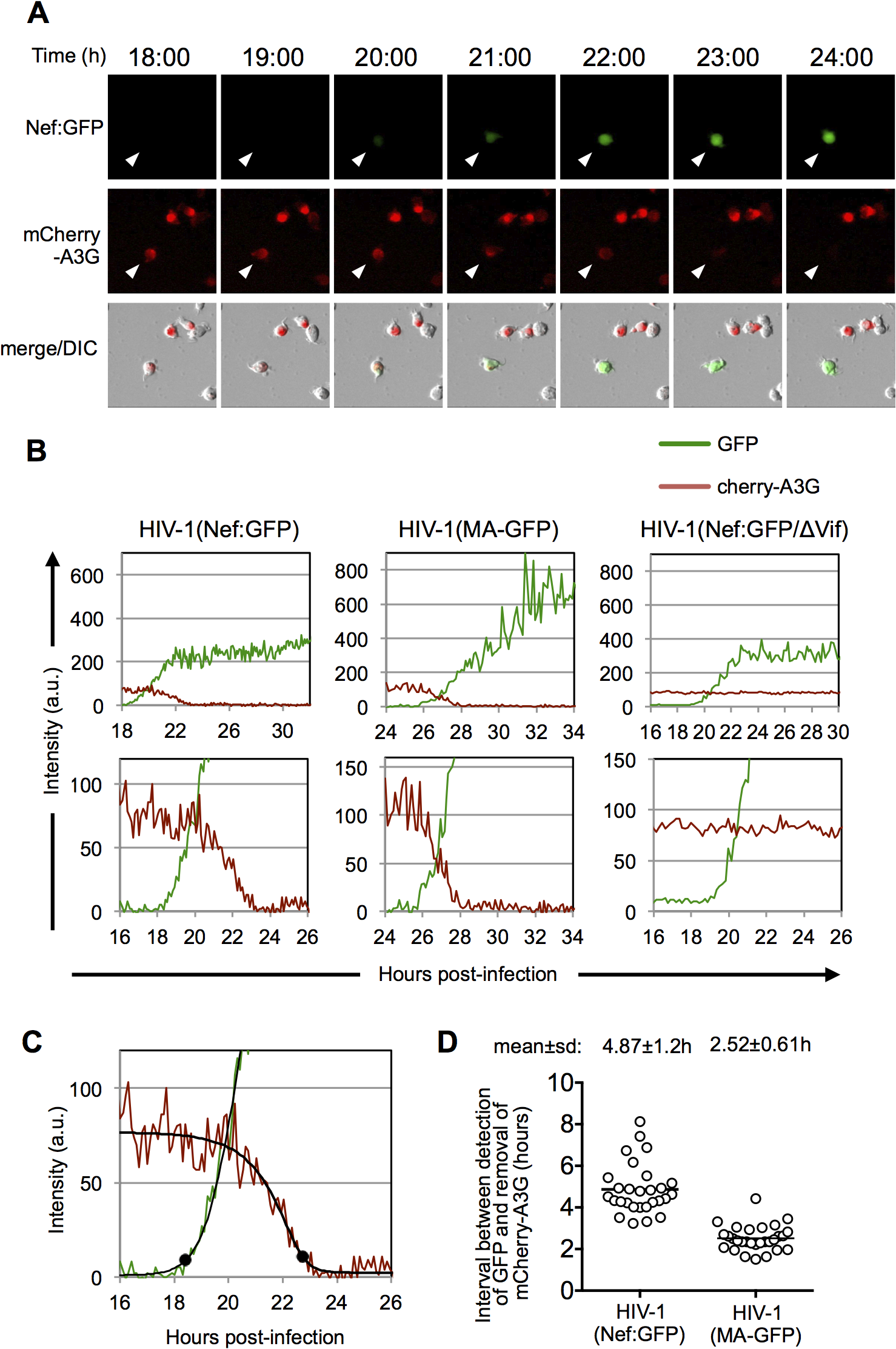 Dynamics of A3G down-regulation in individual HIV-1 infected cells.