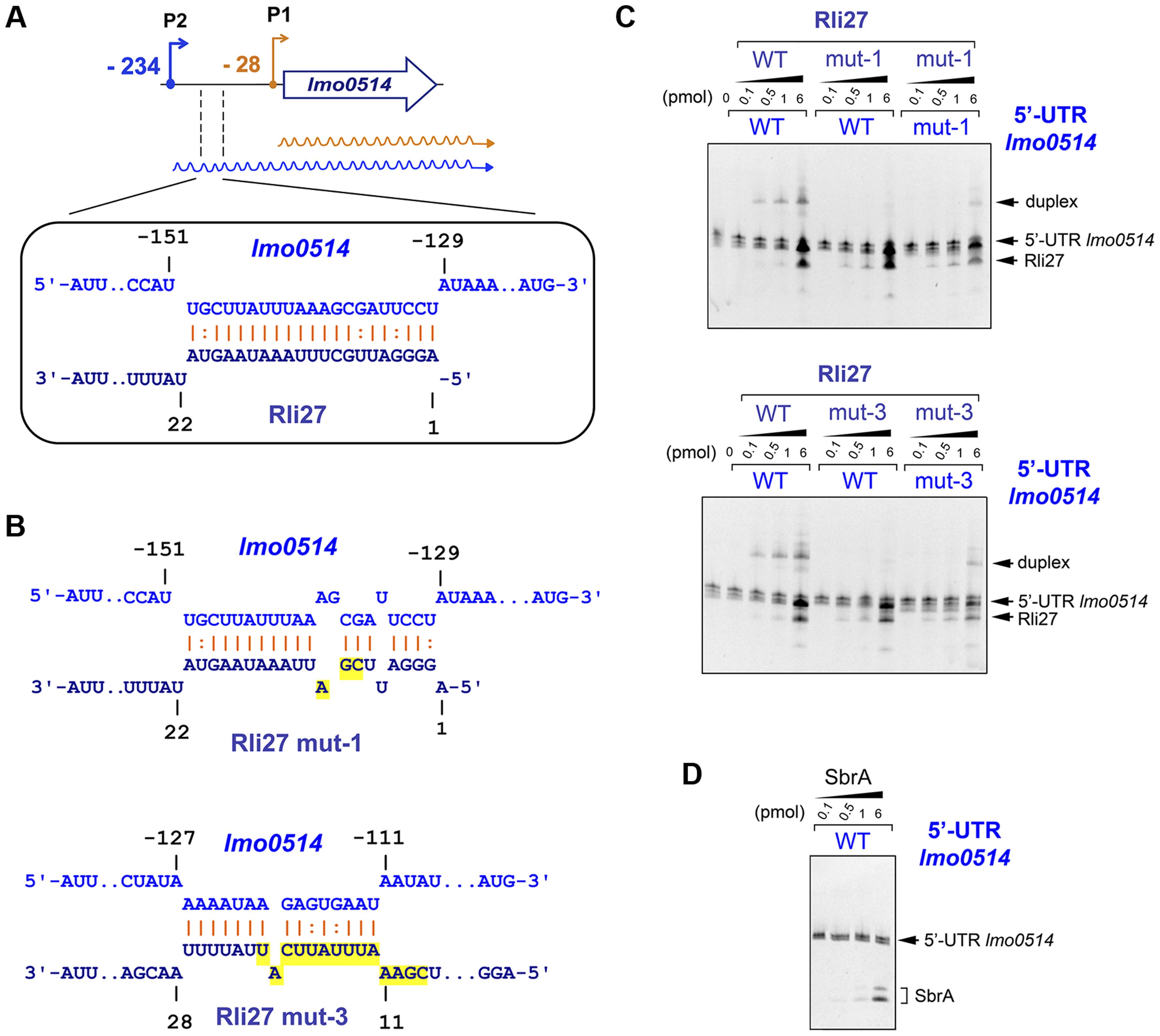 Rli27 interacts <i>in vitro</i> with the <i>lmo0514</i> long 5′-UTR.