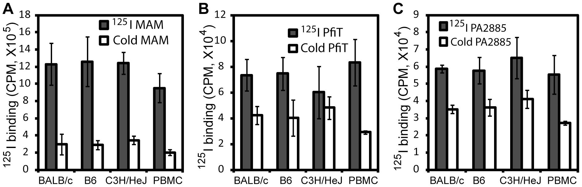 Analysis of binding of <sup>125</sup>I-lebdeled superantigens to murine splenocytes and human PBMC.