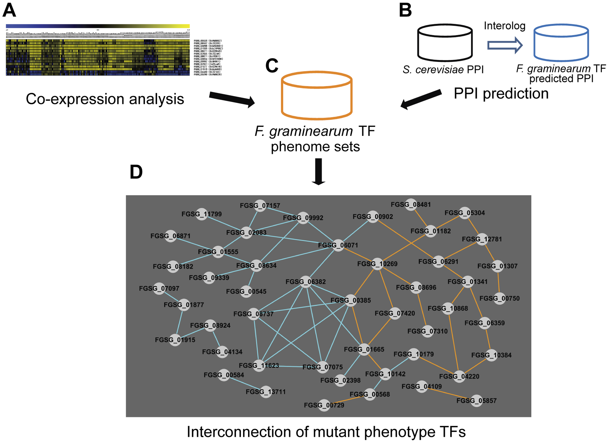 Transcription factors (TFs) with phenotype changes are interconnected either by co-expression or predicted protein-protein interaction (PPI).