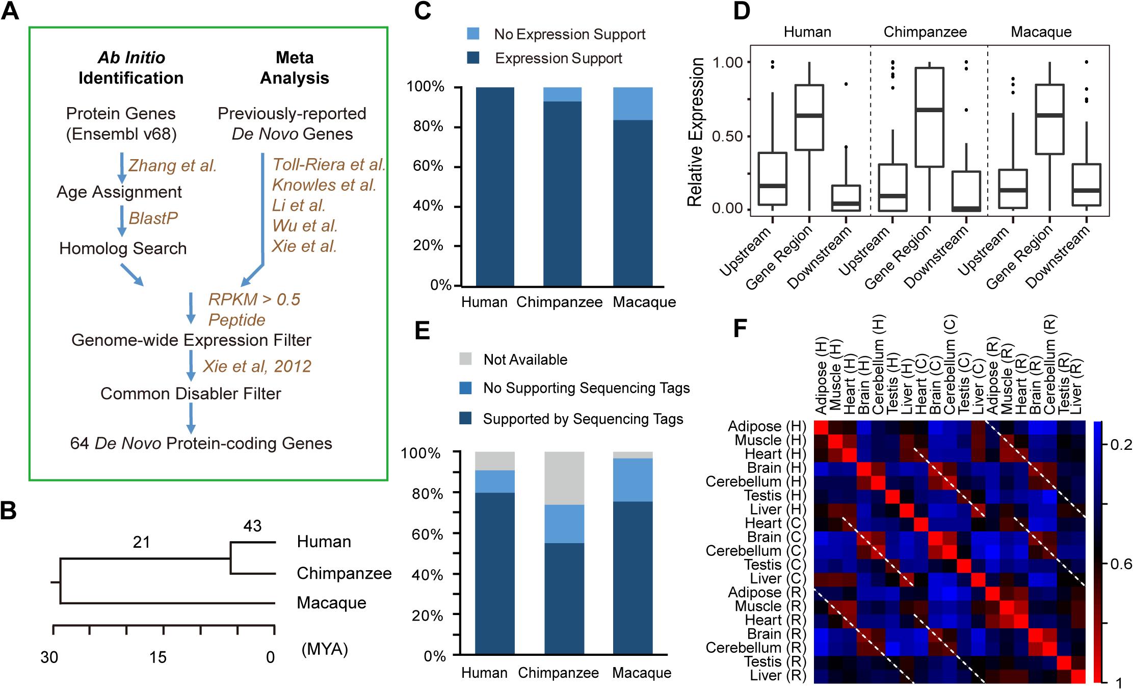 <i>De novo</i> protein-coding genes originating from lncRNAs.
