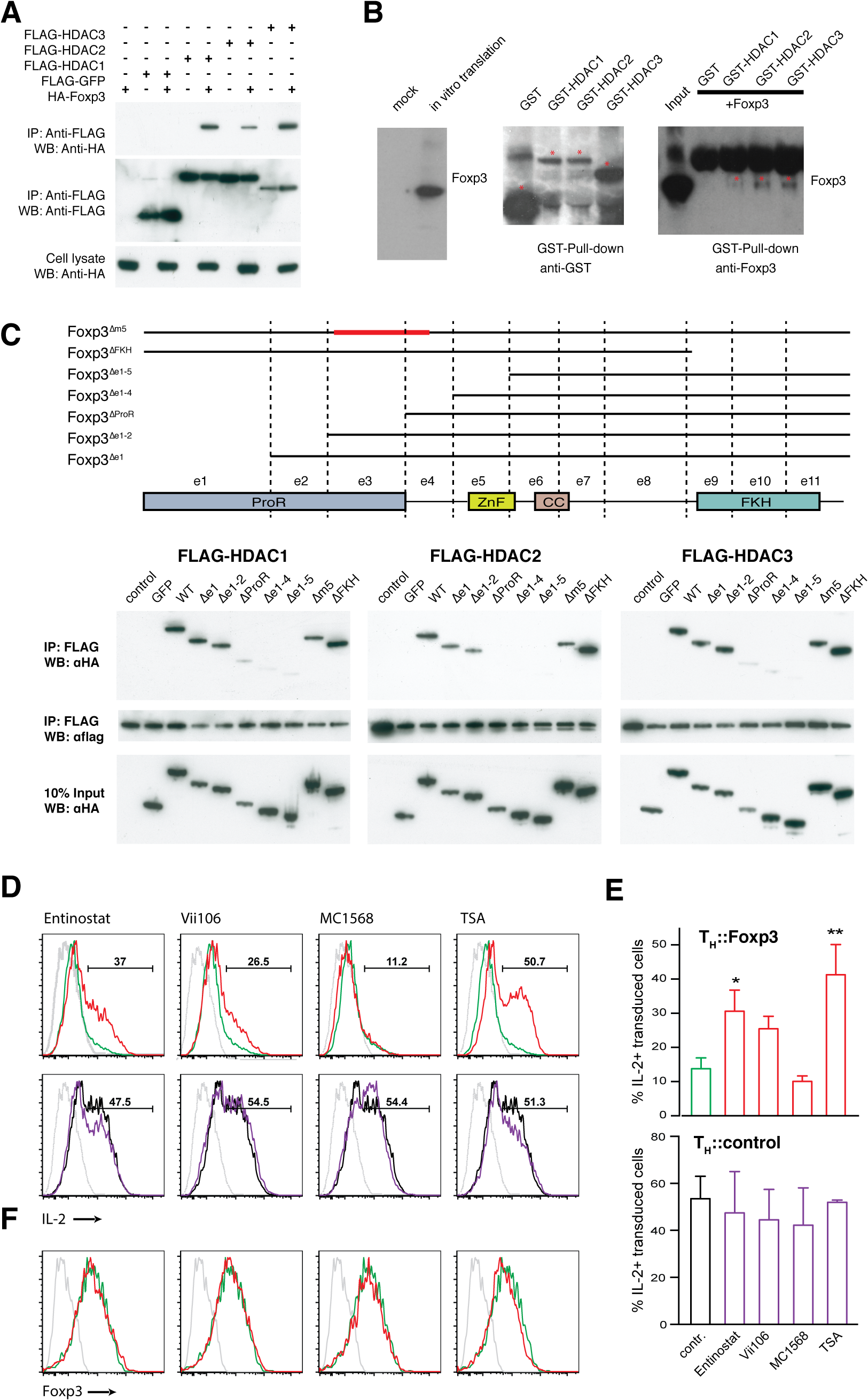 Foxp3 interacts physically with class I HDACs to suppress IL-2.