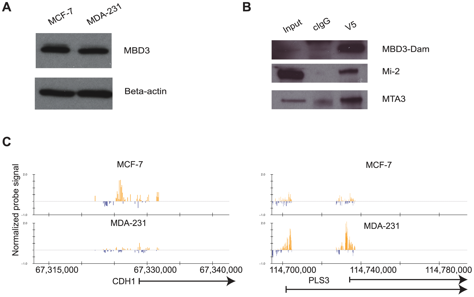 The DamID platform for location analysis of human MBD3.