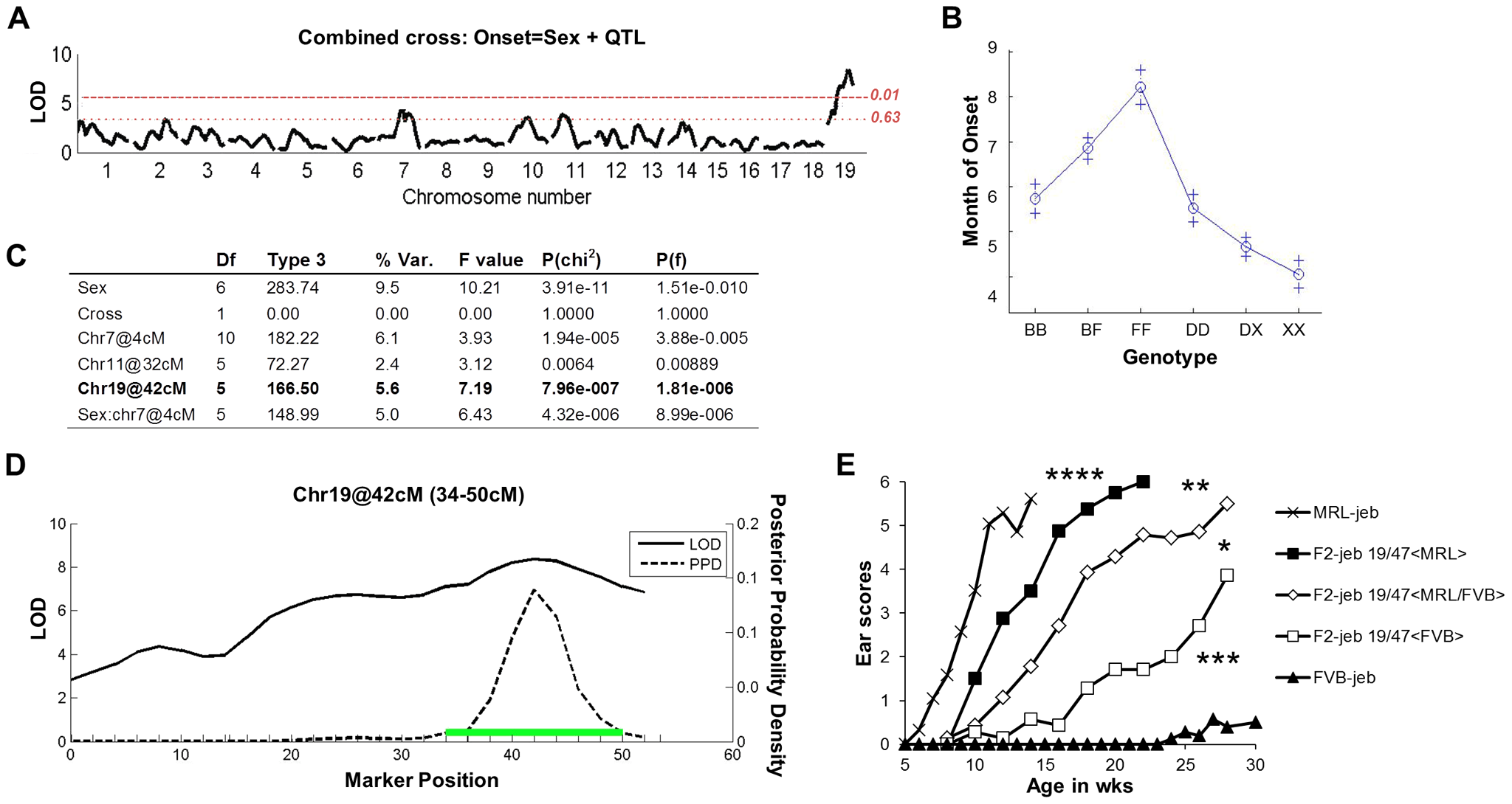 F<sub>2</sub> segregation analysis identifies a strong chr19 QTL.