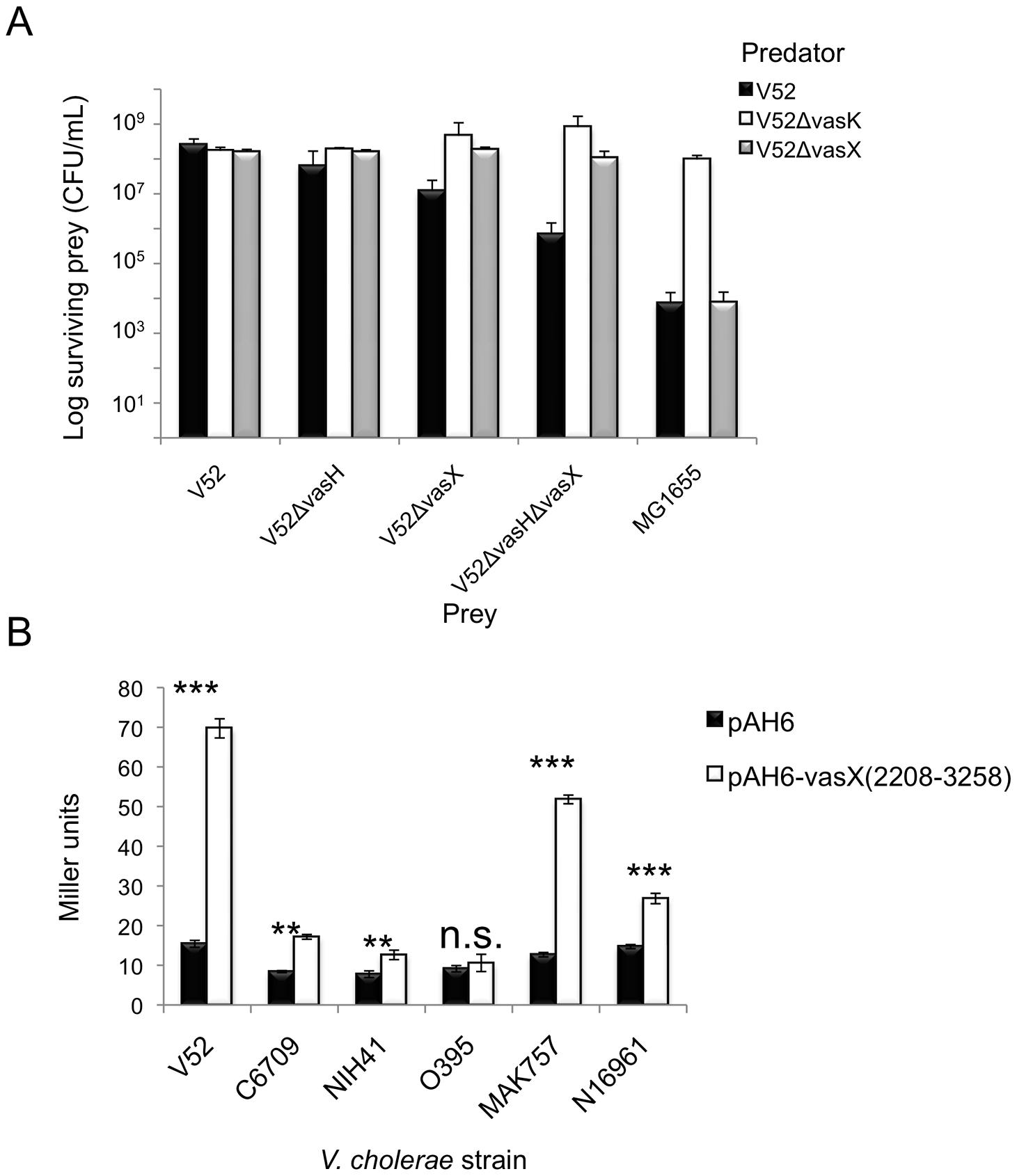 <i>VasX</i> contains a promoter to drive expression of <i>tsiV2</i> in several <i>V. cholerae</i> strain backgrounds.
