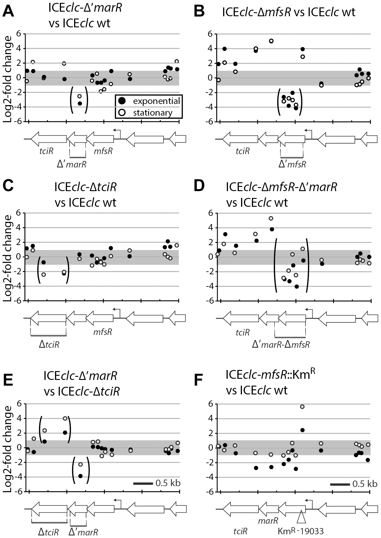 Detailed view on the differential expression of the <i>mfsR</i> operon in <i>P. putida</i> ICE<i>clc</i> wild-type or mutants.