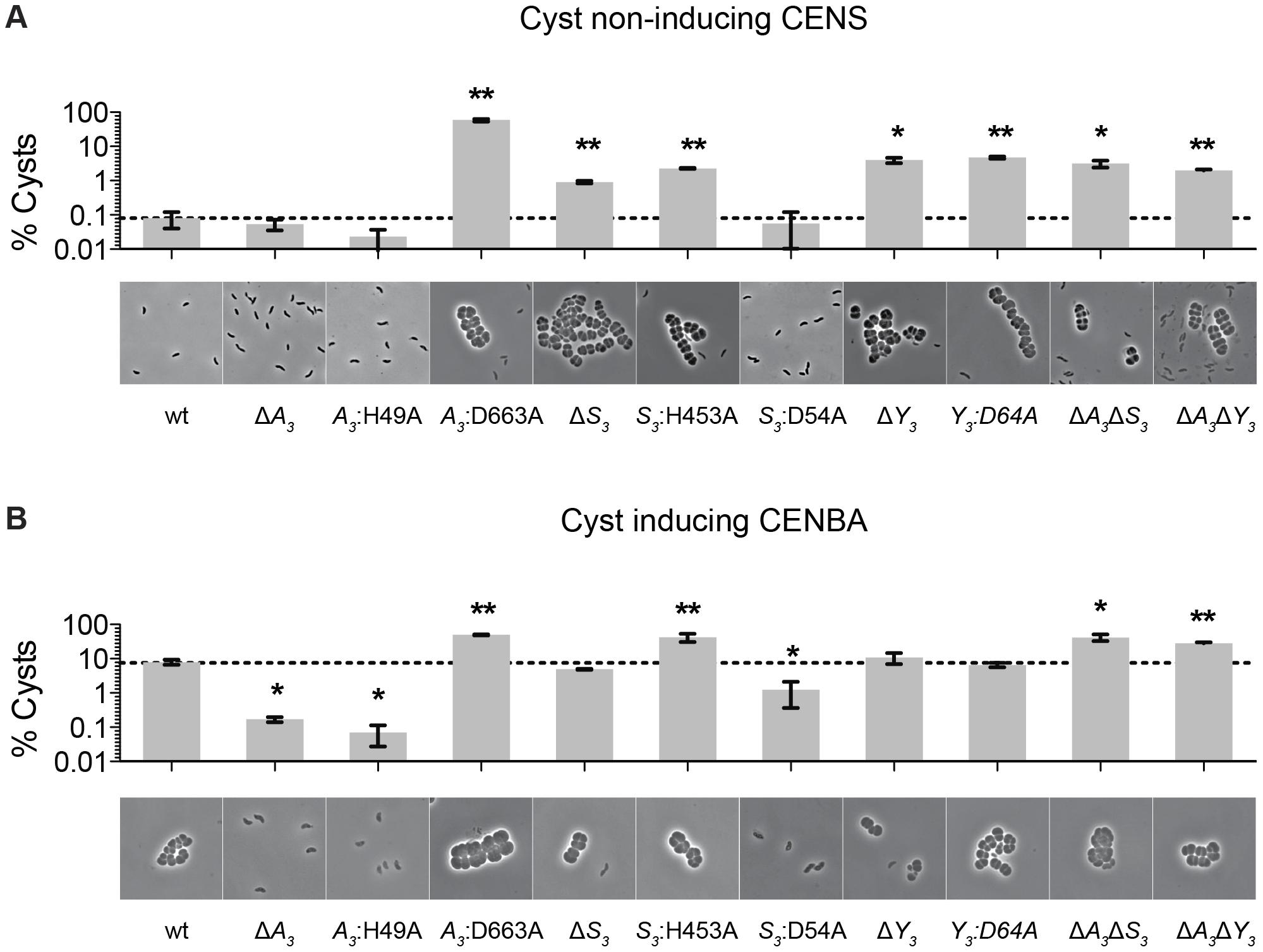 Characterization of <i>cheS<sub>3</sub></i>, <i>cheA<sub>3</sub></i> and <i>cheY<sub>3</sub></i> mutants.
