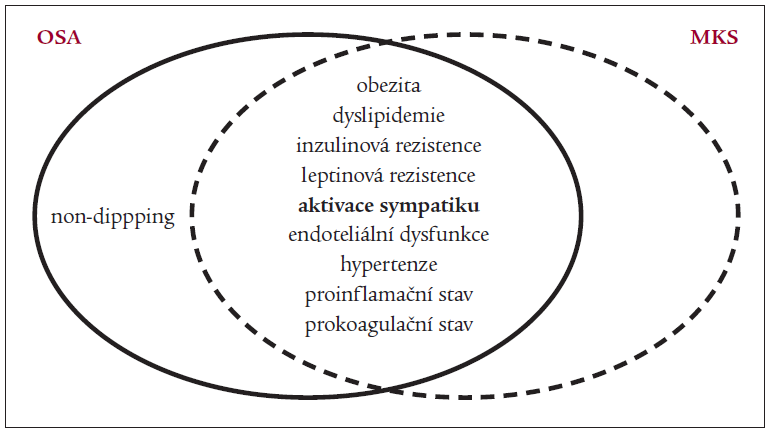 Schéma. Obstrukční spánková apnoe (OSA) a metabolický syndrom (MS) sdílejí řadu regulačních a metabolických abnormalit. Tato podobnost, společně s vysokým výskytem obou nozologických jednotek v populaci, dovoluje předpokládat důležitou roli OSA v patofyziologii metabolického syndromu.