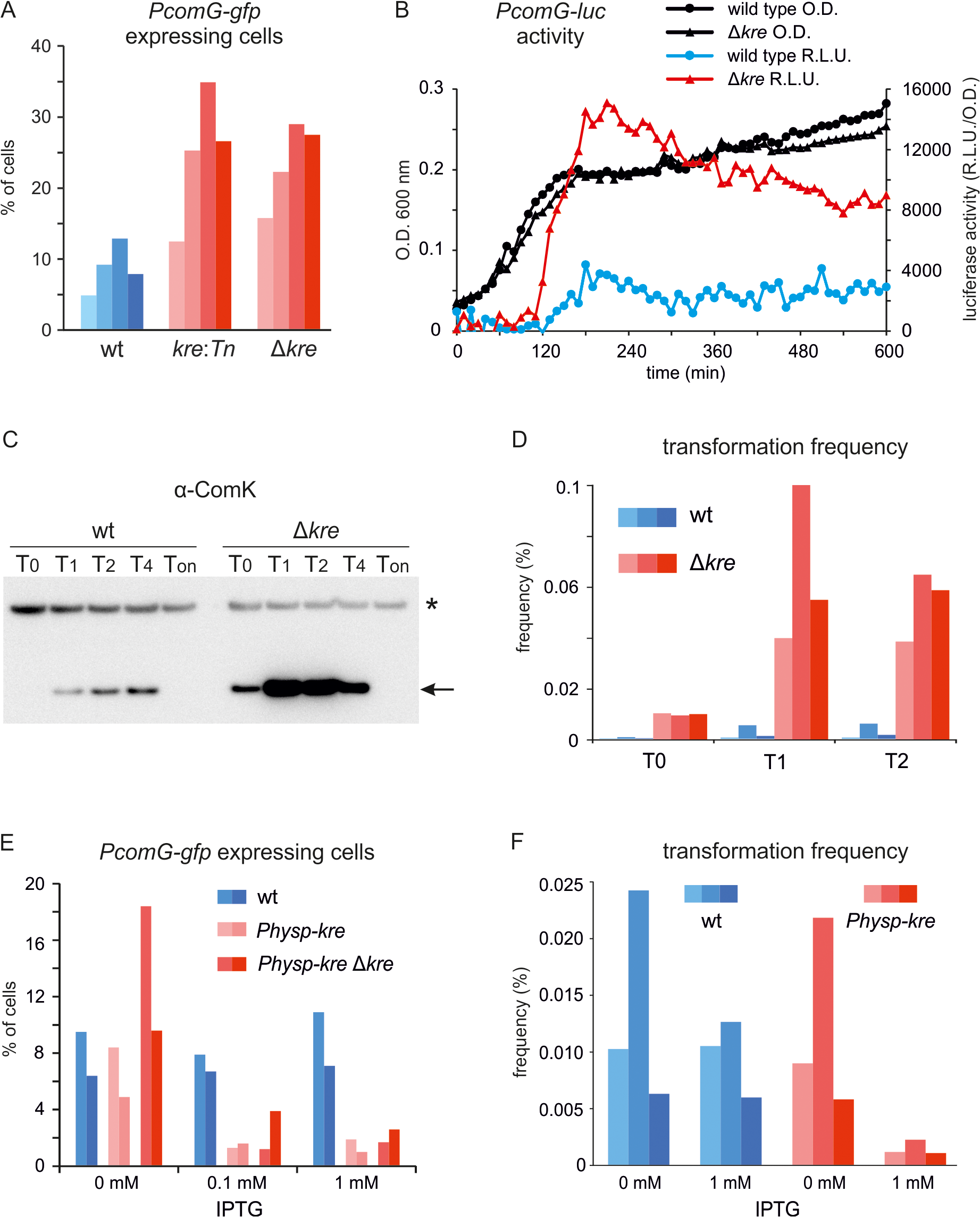 Altered levels of Kre affect competence development in wild-type strains.