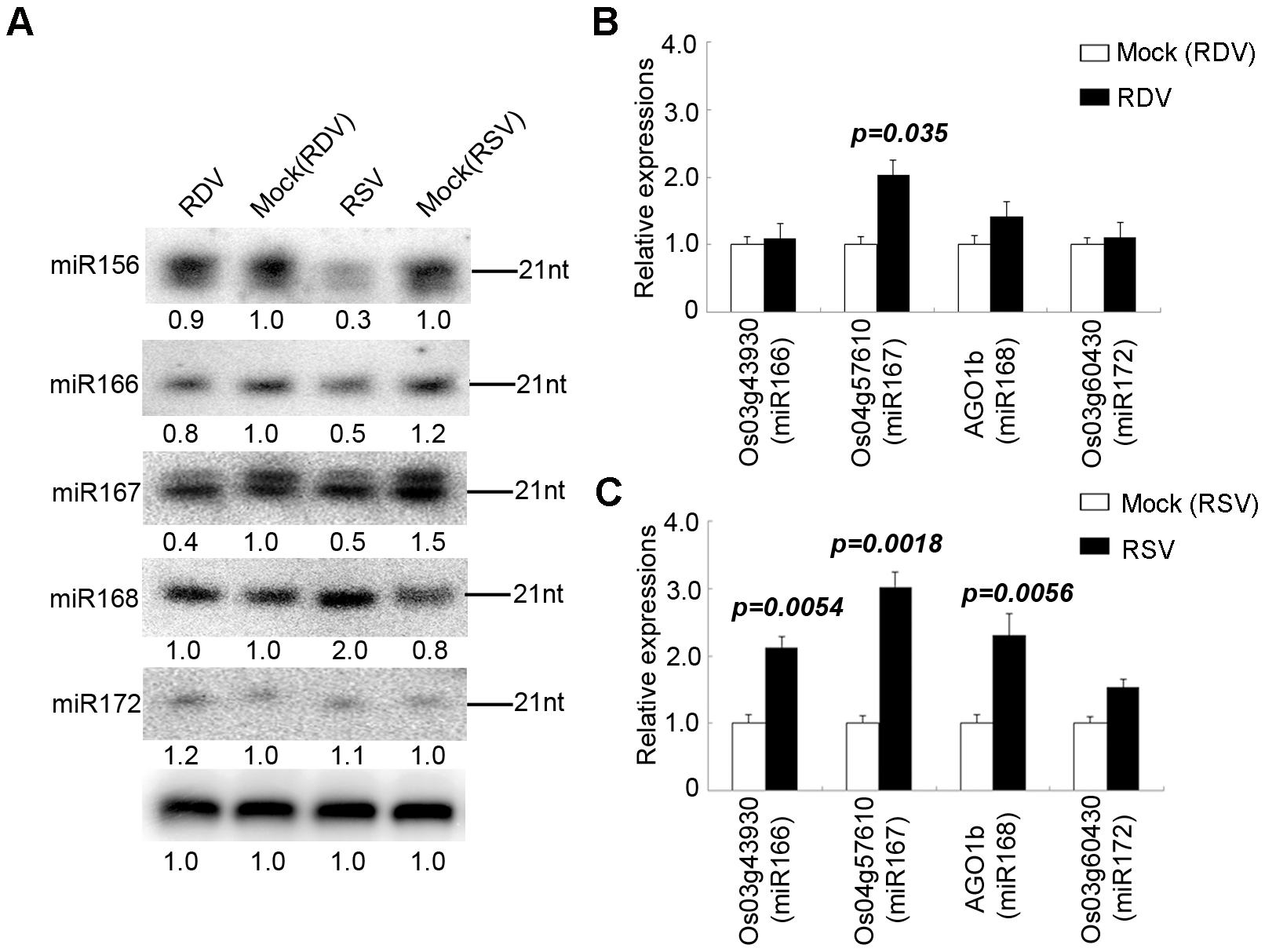 Confirmation of miRNA expression and analysis of miRNA target gene expression of in virus-infected plants.
