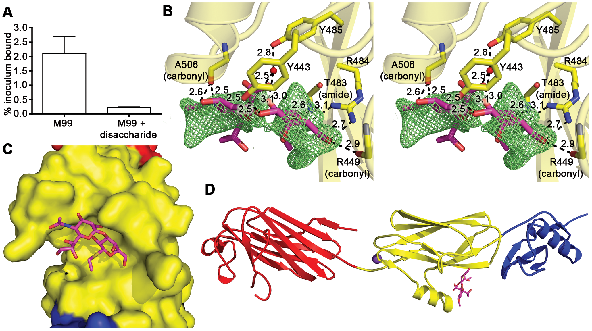 Identification of the receptor binding site.
