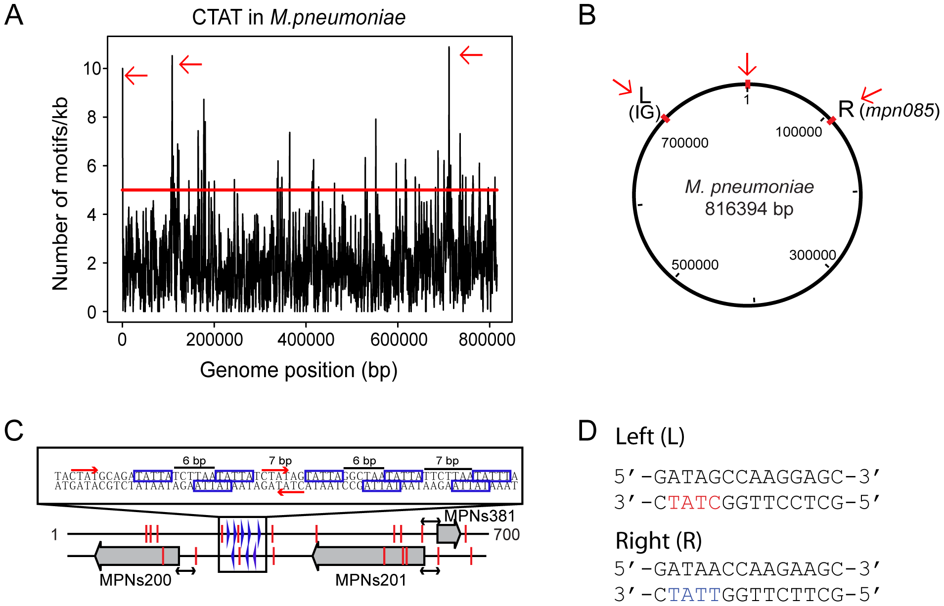Genome-wide distribution of 5′-CT