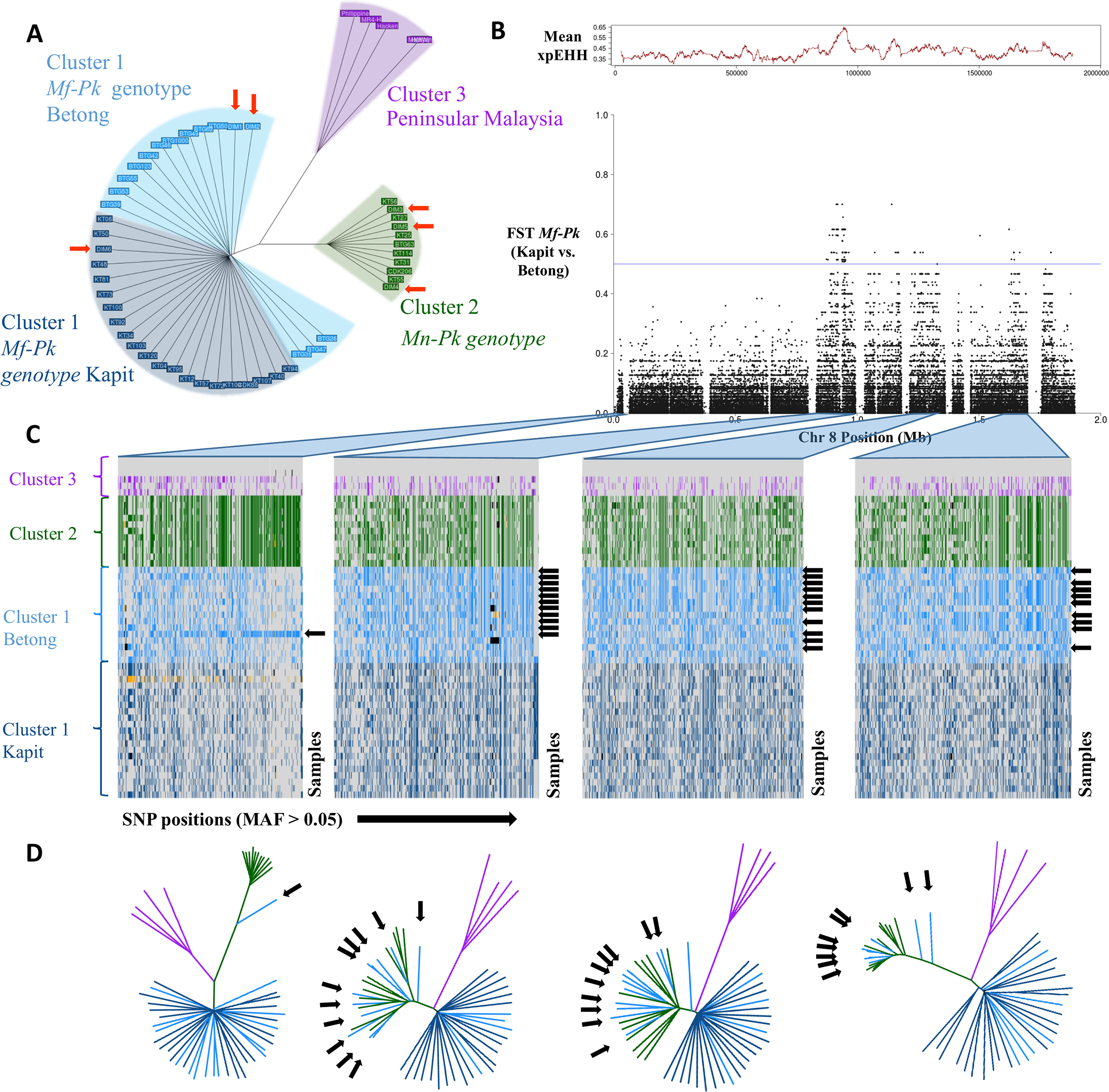 Whole genome population structure and evidence of genetic exchange in chromosome 8.