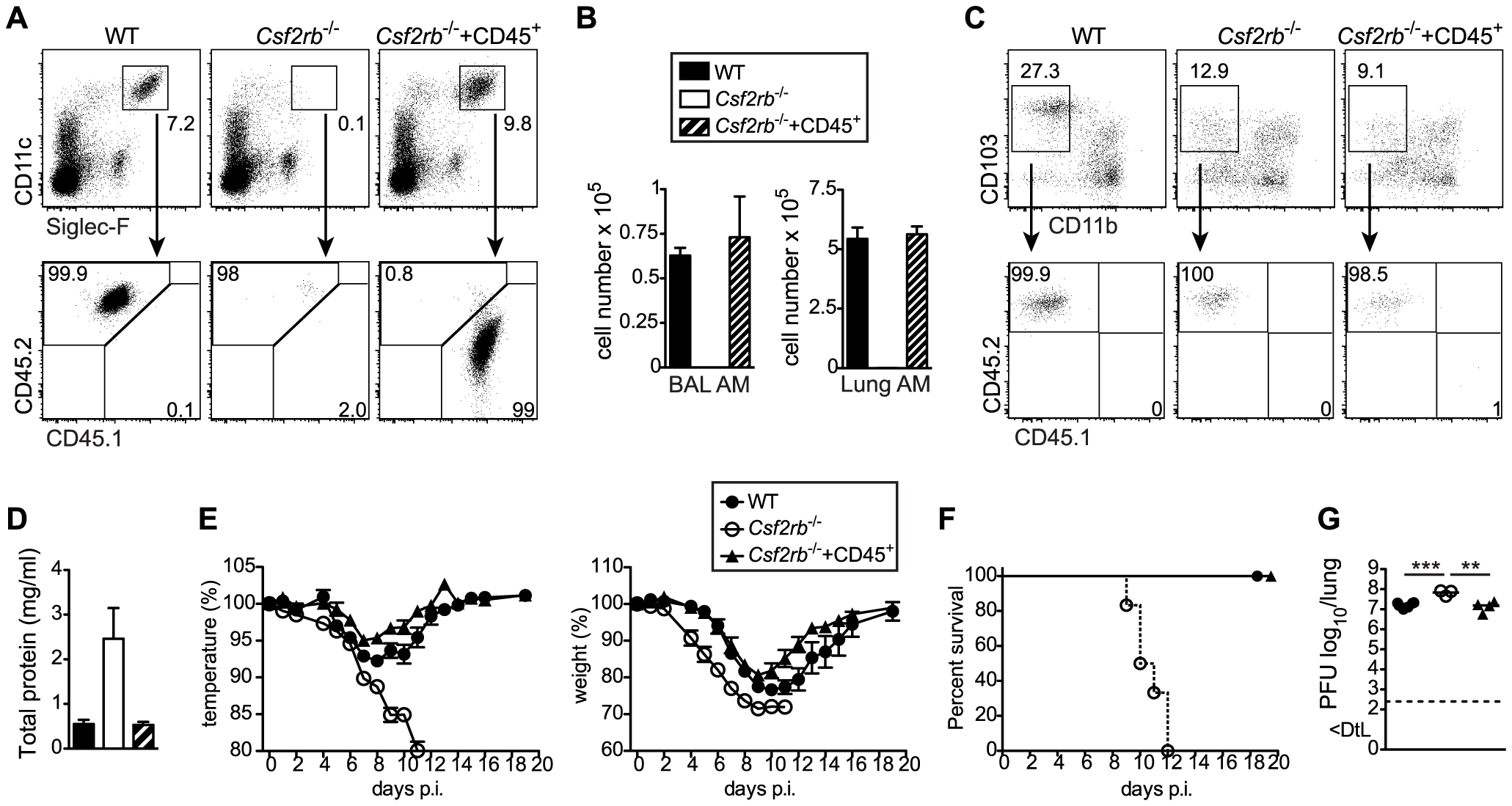 Selective restoration of AM development in <i>Csf2rb</i><sup>−/−</sup> mice prevents severe morbidity and mortality following influenza virus infection.