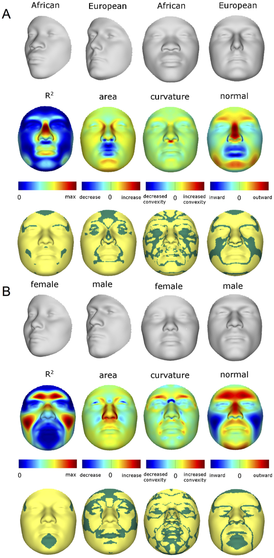 Transformations and heat maps showing how face shape is affected by (A) RIP-A and (B) RIP-S.