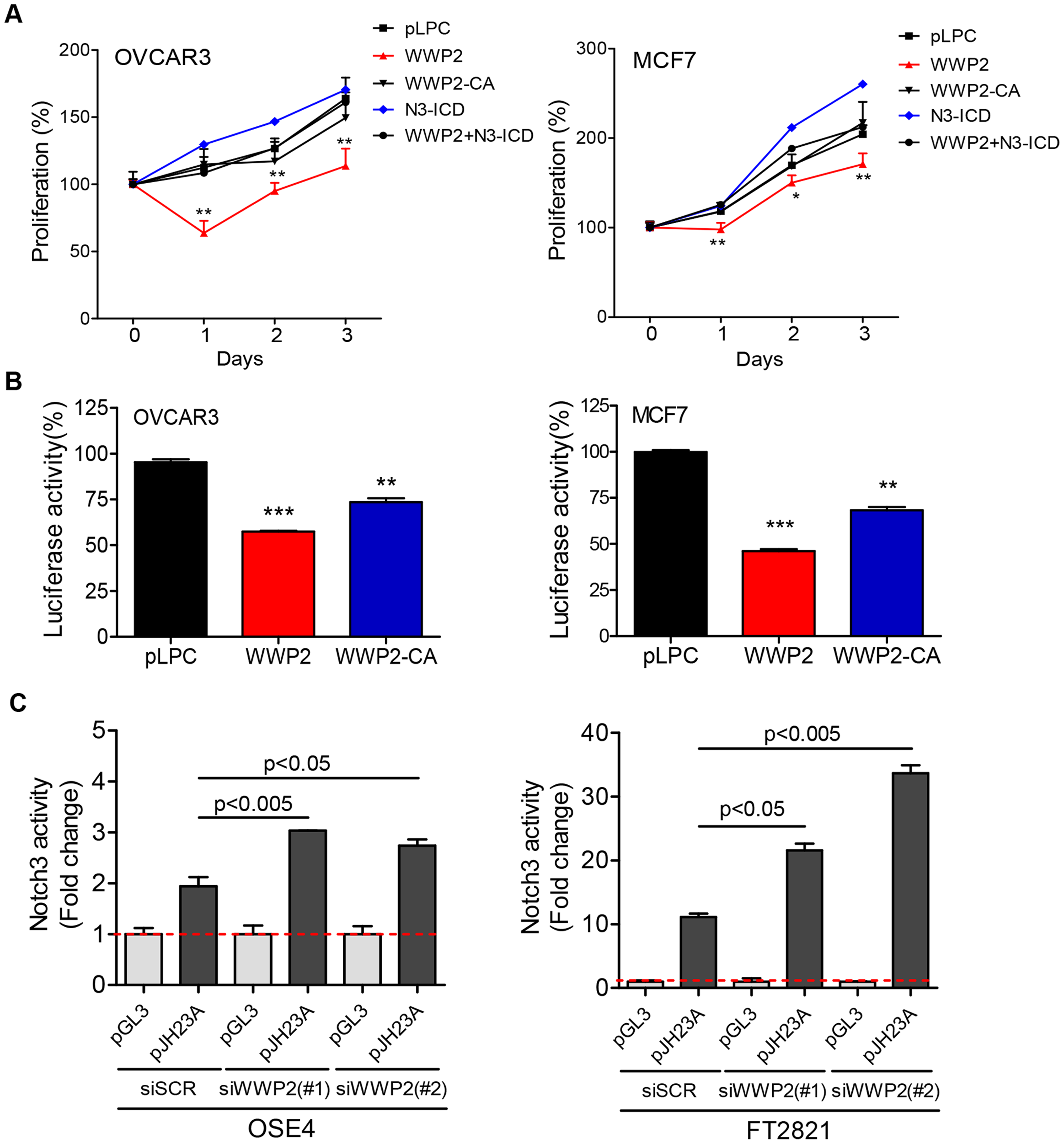 WWP2 regulates Notch3 signaling activity in cancer cells.