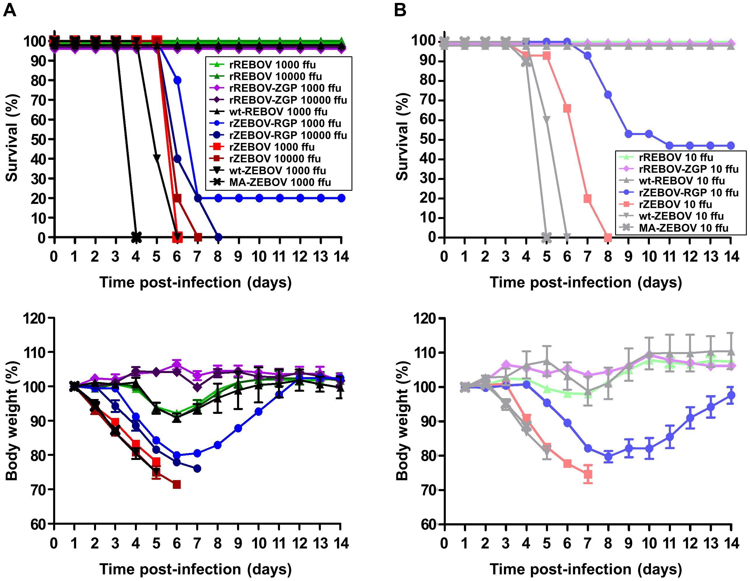 Survival and weight loss in IFNAR<sup>−/−</sup> mice.