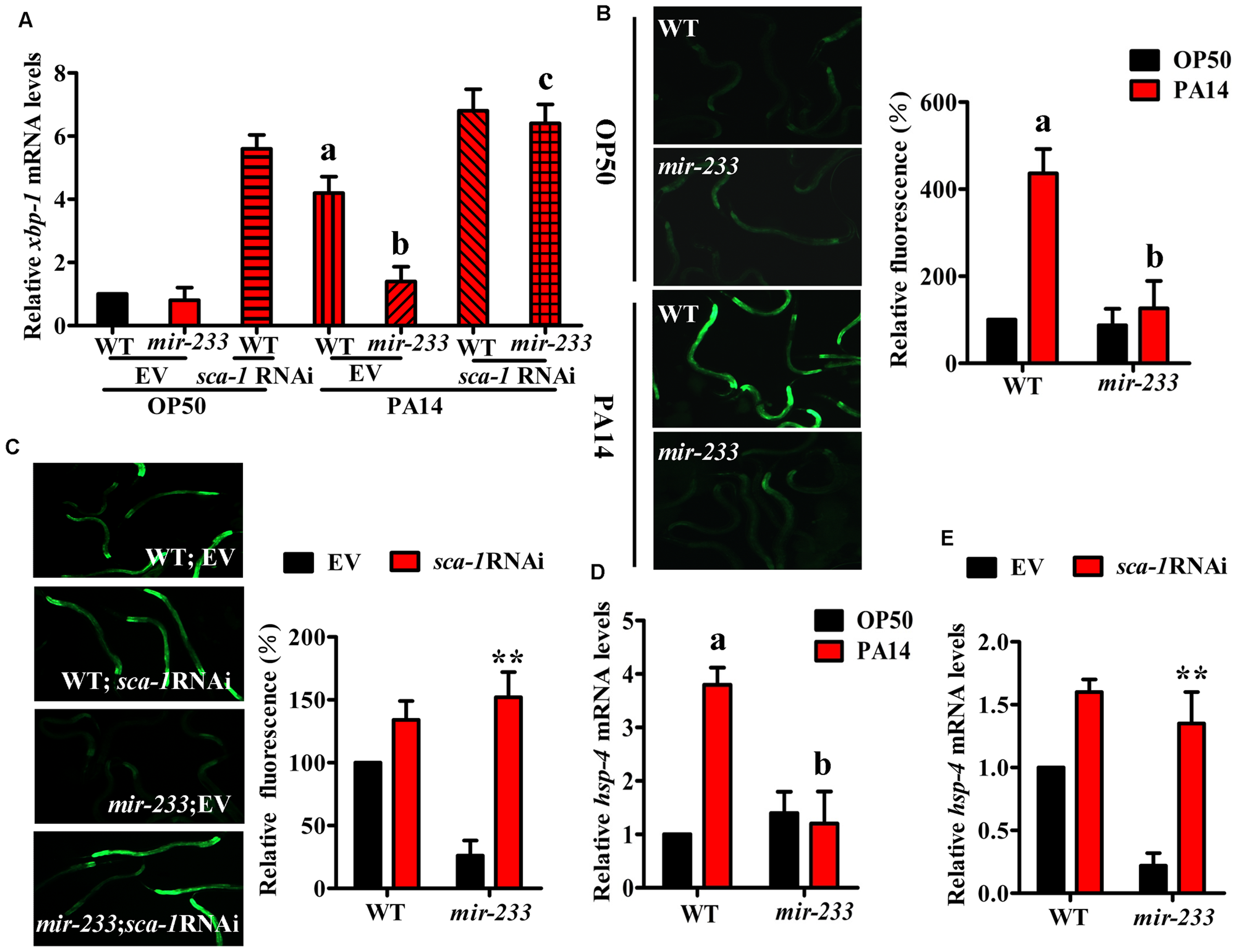 <i>mir-233</i> mediates the XBP-1-dependent UPR induced by <i>P. aeruginosa</i> infection.