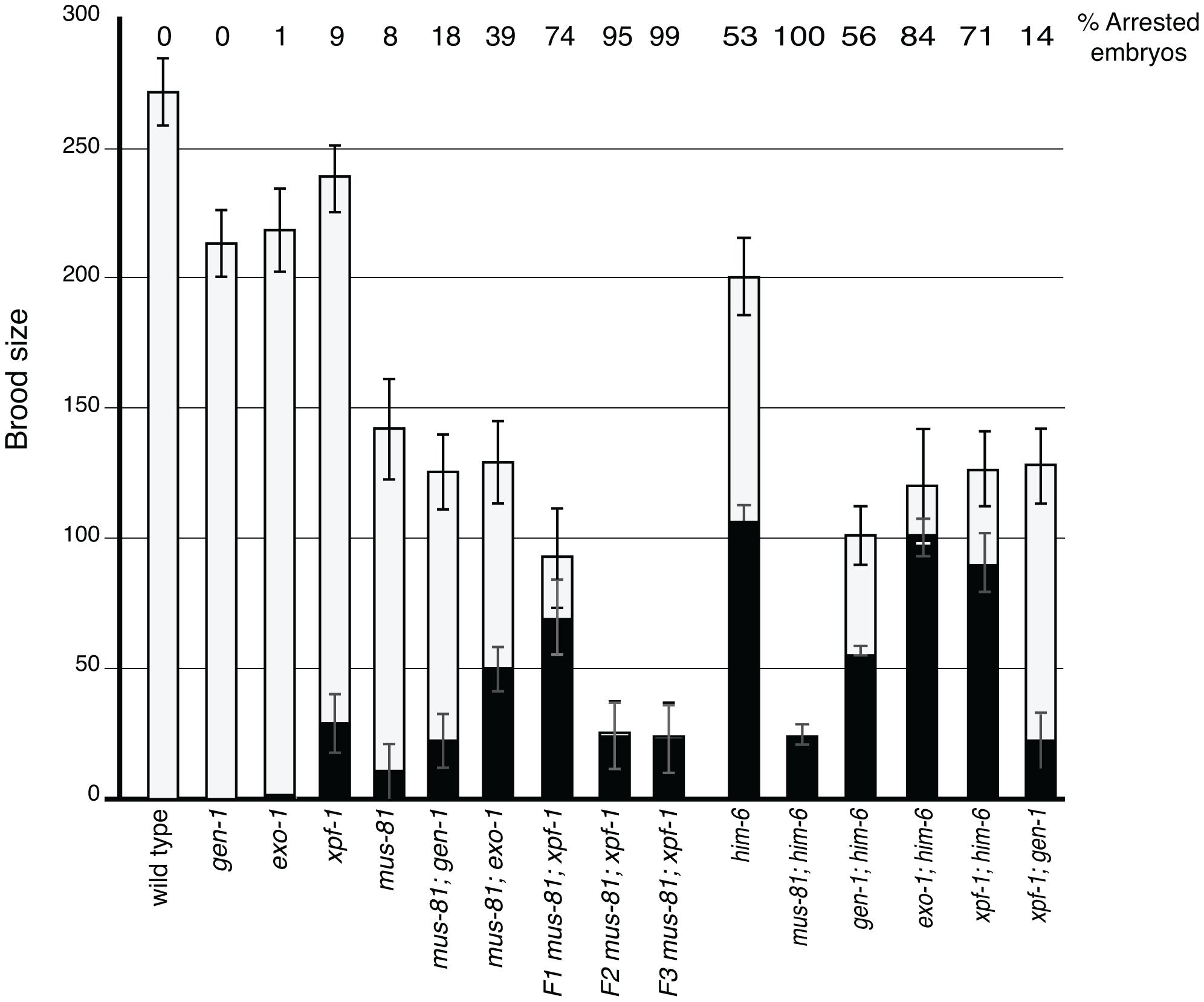 Brood analysis of <i>mus-81</i>, <i>him-6</i>, <i>xpf-1</i>, <i>exo-1</i>, <i>gen-1</i> and double mutants.