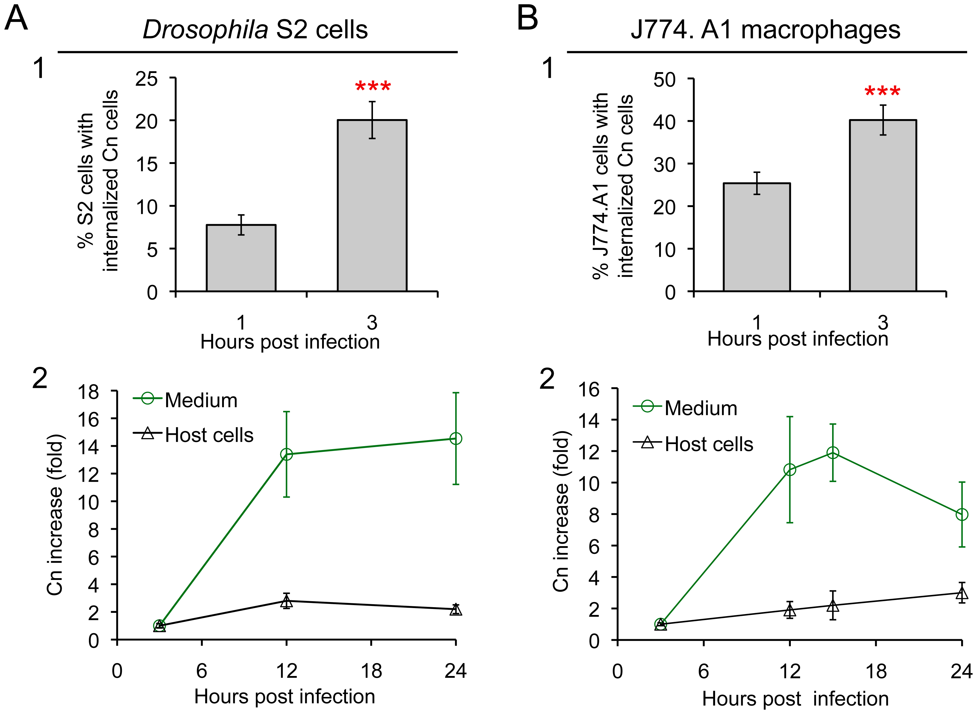 <i>Drosophila</i> S2 cells and murine J774.A1 macrophages support similar patterns of Cn phagocytosis and intracellular replication.
