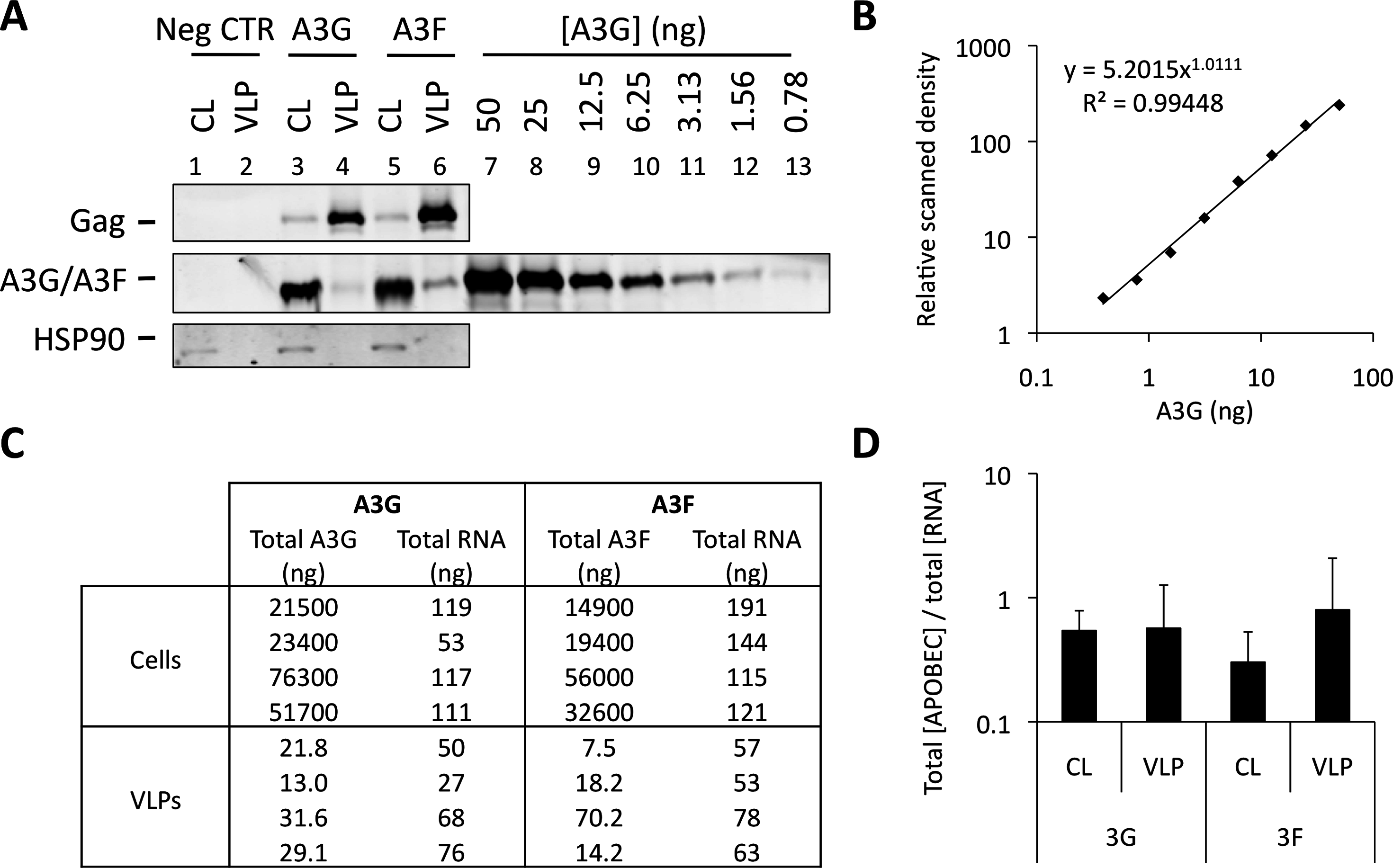 A3G and A3F concentrations are similarly distributed between cells and VLPs by RNA. (A)