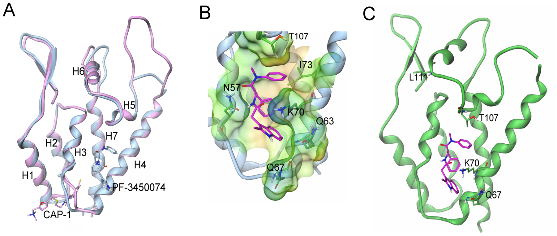 Structure of the novel inhibitor binding site and context in the NTD.