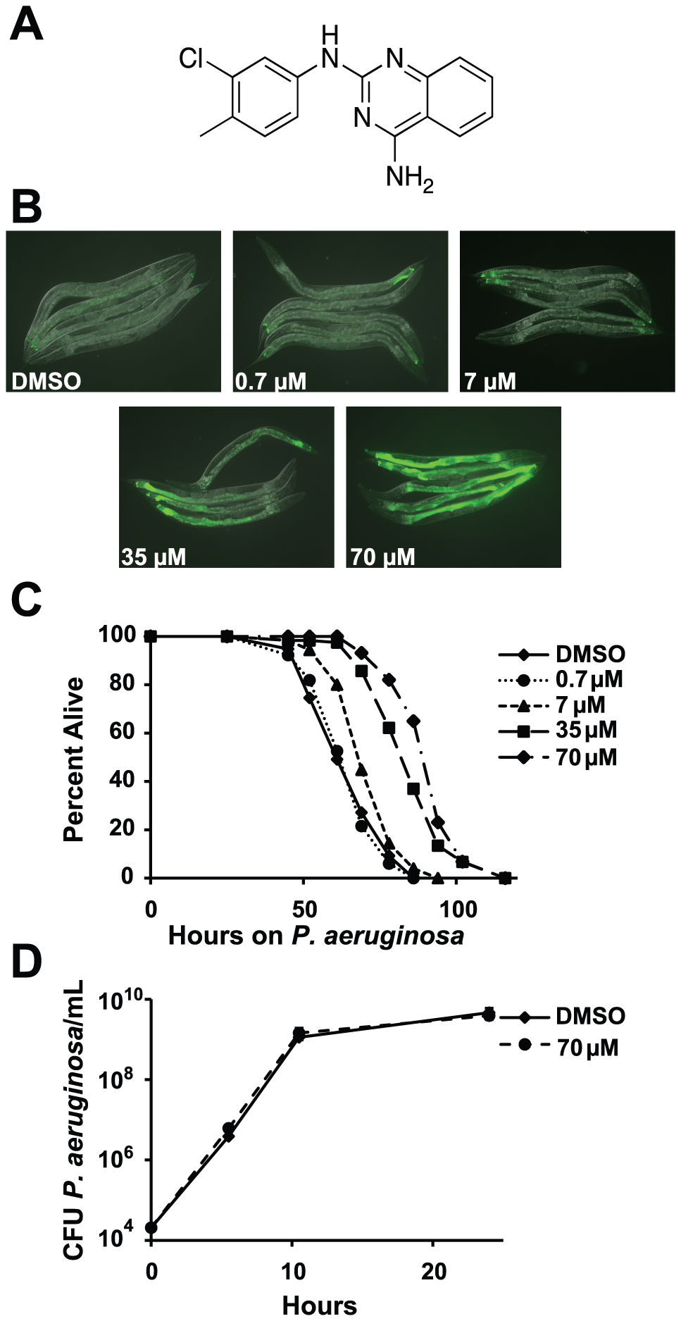 RPW-24 activates <i>F35E12.5::GFP</i> and prolongs the lifespan of <i>C. elegans</i> infected with <i>P. aeruginosa</i> without affect growth of the pathogen.