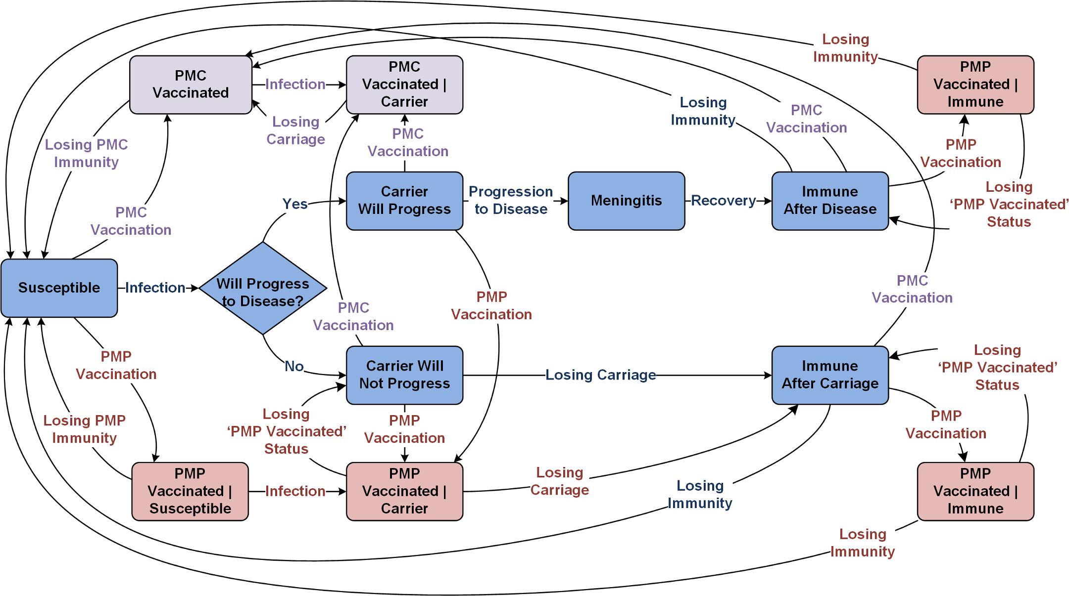 Meningitis natural history and transmission dynamics, assuming a single aggregated circulating serogroup.