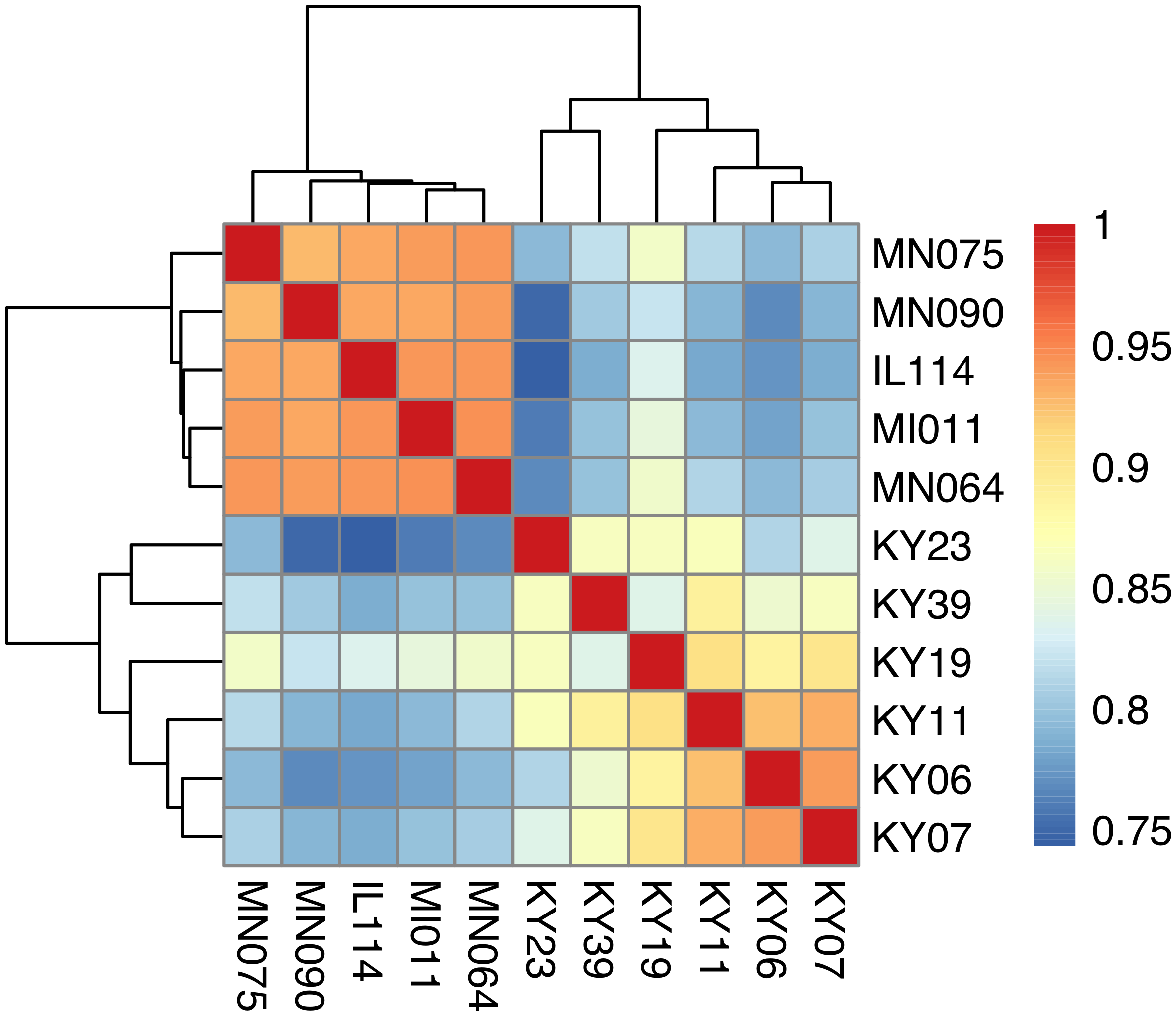 Hierarchical clustering of gene expression in WNS-affected and unaffected bats.