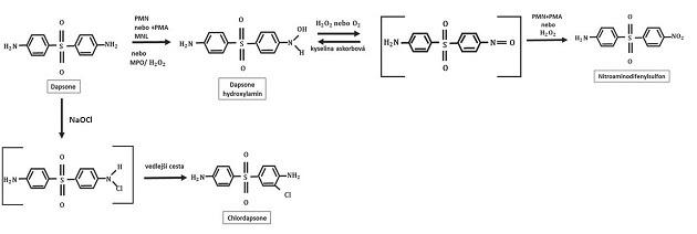 Struktura dapsone hydroxylaminu
