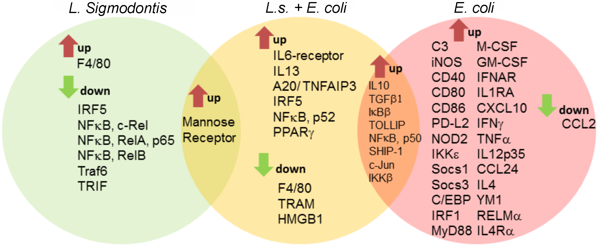 Macrophage transcriptional analysis reveals a less inflammatory phenotype in <i>L. sigmodontis</i>-infected mice during <i>E. coli</i> challenge.
