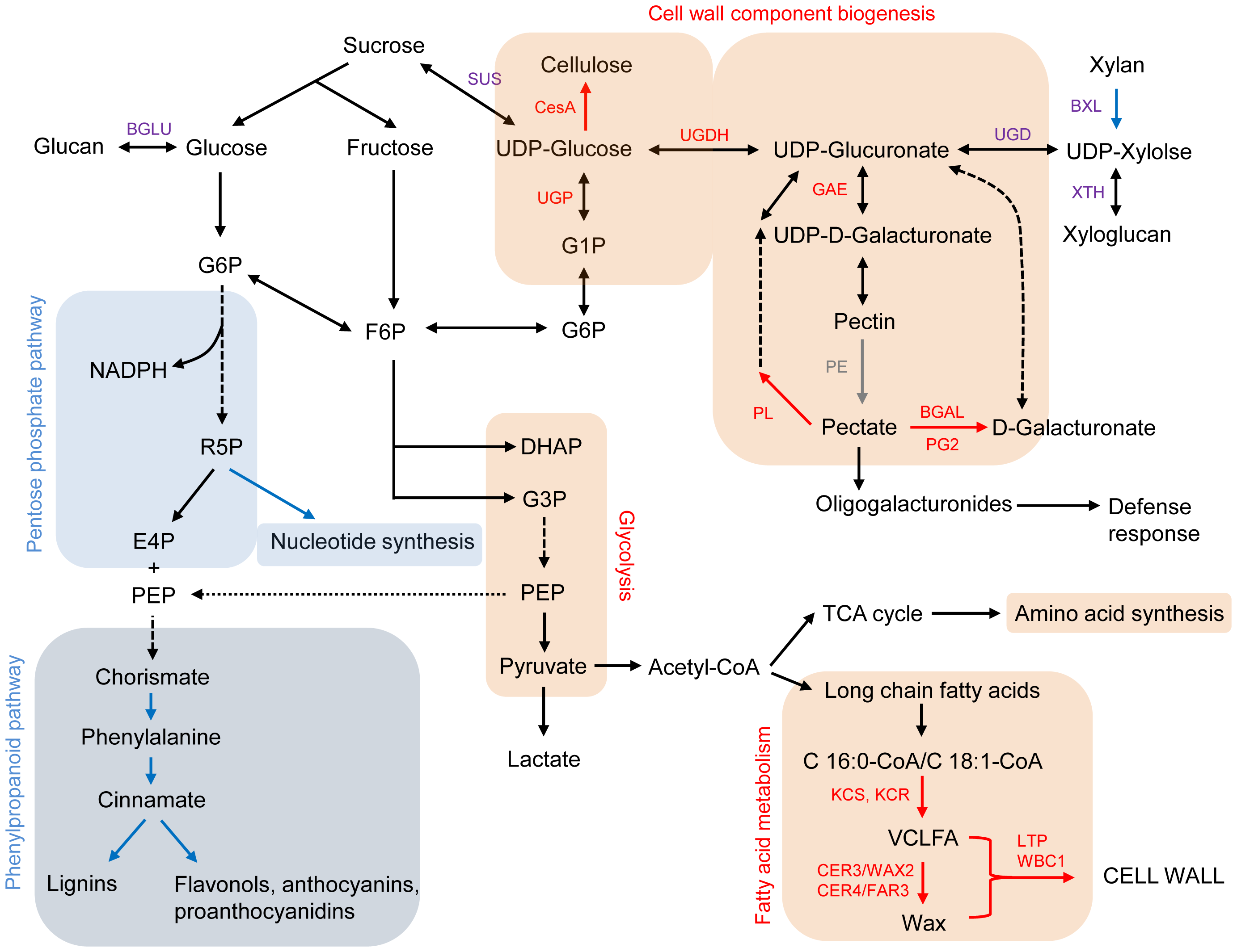Carbohydrate and fatty acid metabolisms, focusing on cell wall biosynthesis <em class=&quot;ref&quot;>[68]</em>–<em class=&quot;ref&quot;>[70]</em>.